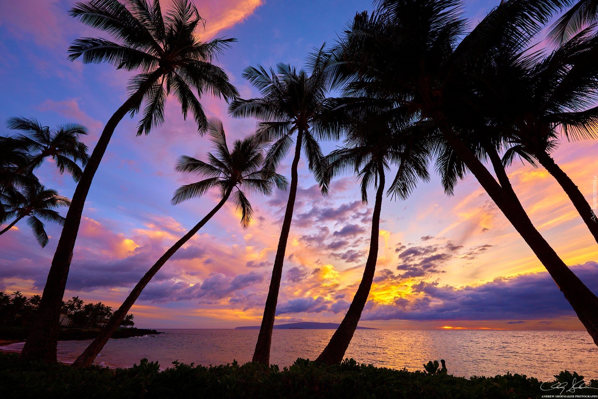 Tapeta Palmy Na Plazy Wailea W South Maui O Zachodzie Slonca on Wailea Beach Maui