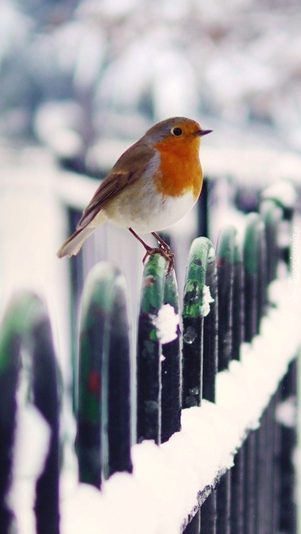 beautiful bird winter ndash - photo #29