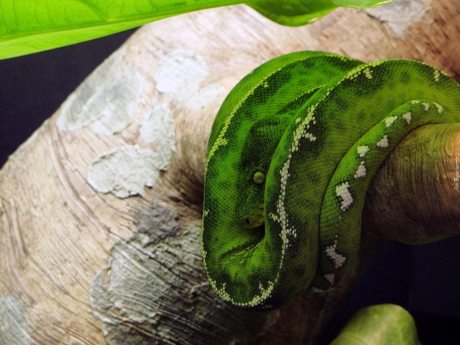 Зеленая змея макро съемка  № 3233890  скачать