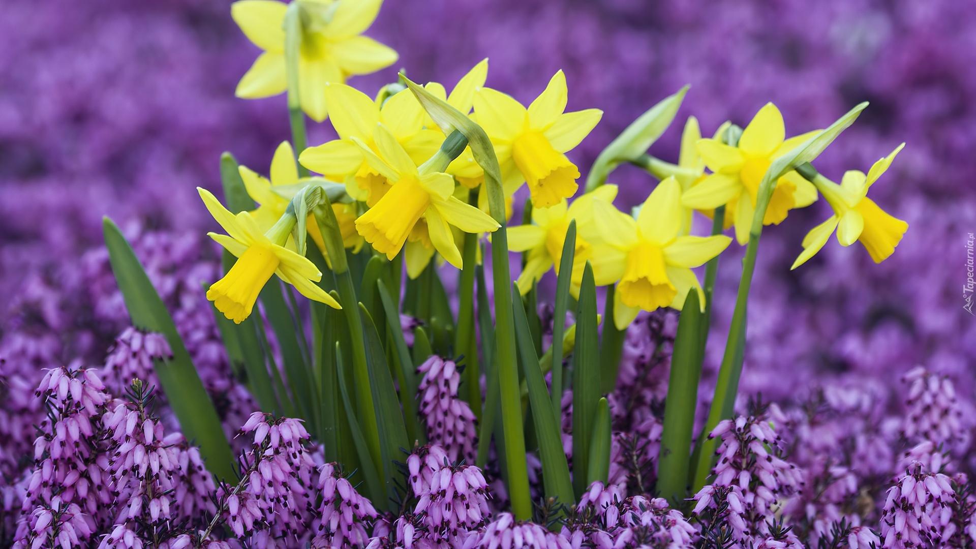 Onkile wiosenne kwiaty for Plante 3d gratuit