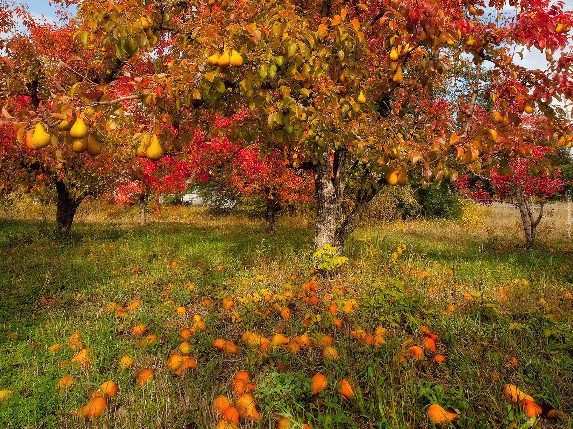 http://www.tapeciarnia.pl/tapety/normalne/110426_sad_drzewa_owocowe_gruszki.jpg
