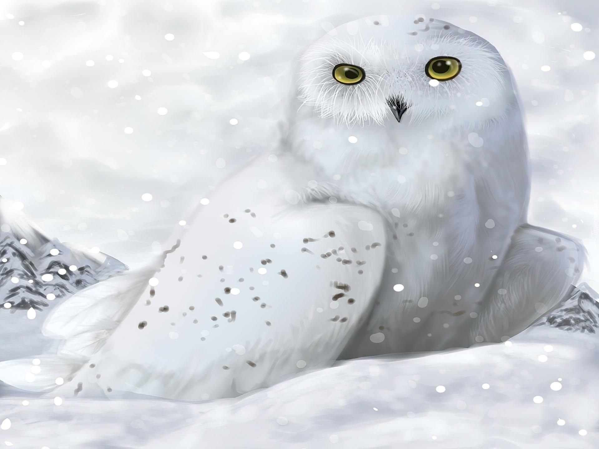 owl winter bird animal - photo #25