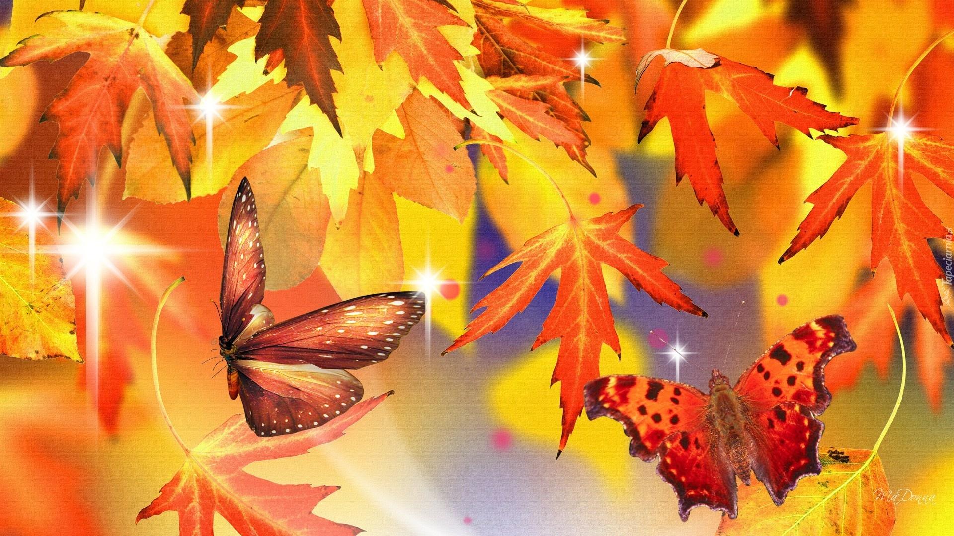 Znalezione obrazy dla zapytania jesień motyli