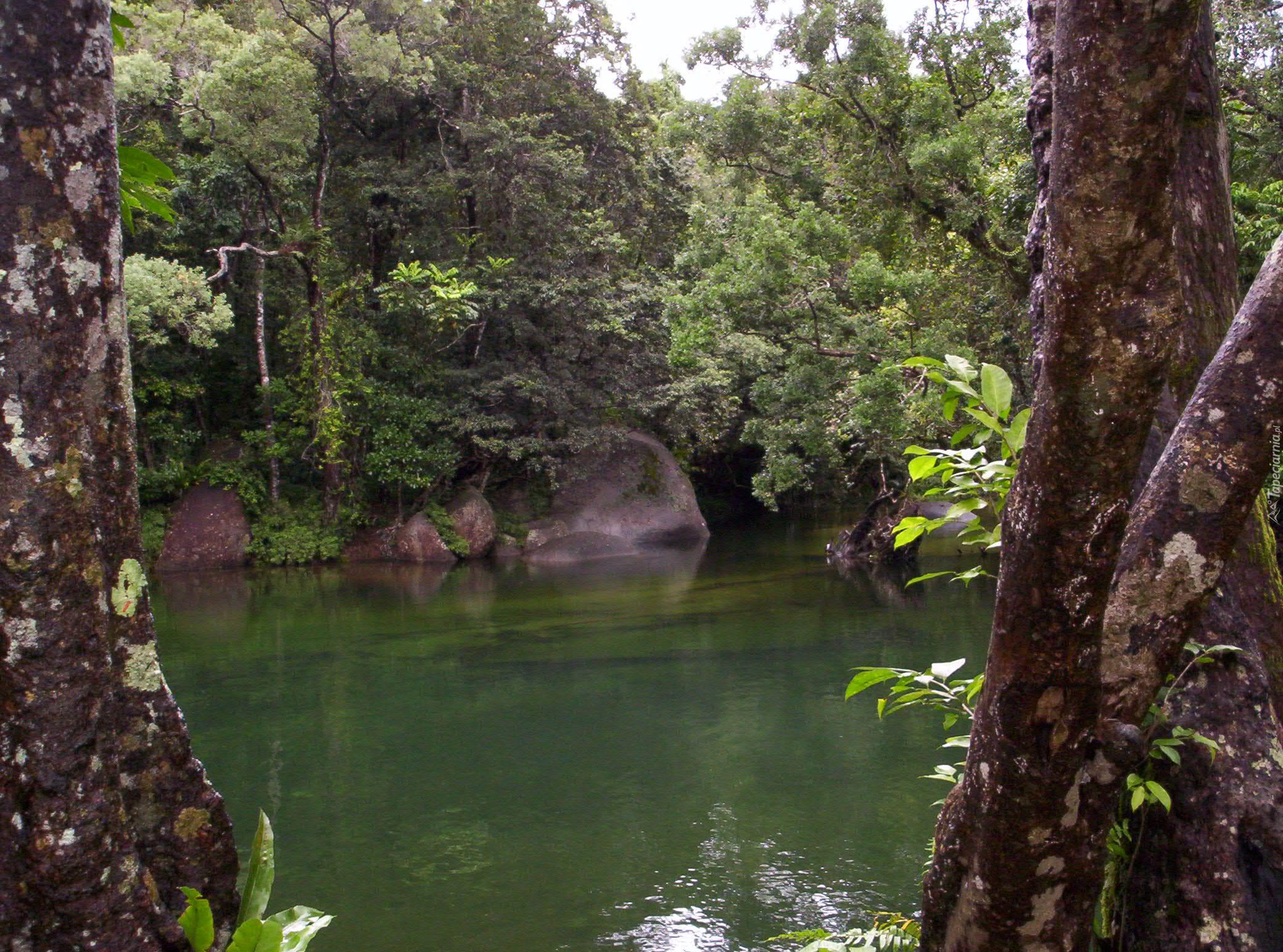 Babinda Australia  city images : Rzeka, Drzewa, Kamienie, Babinda, Australia