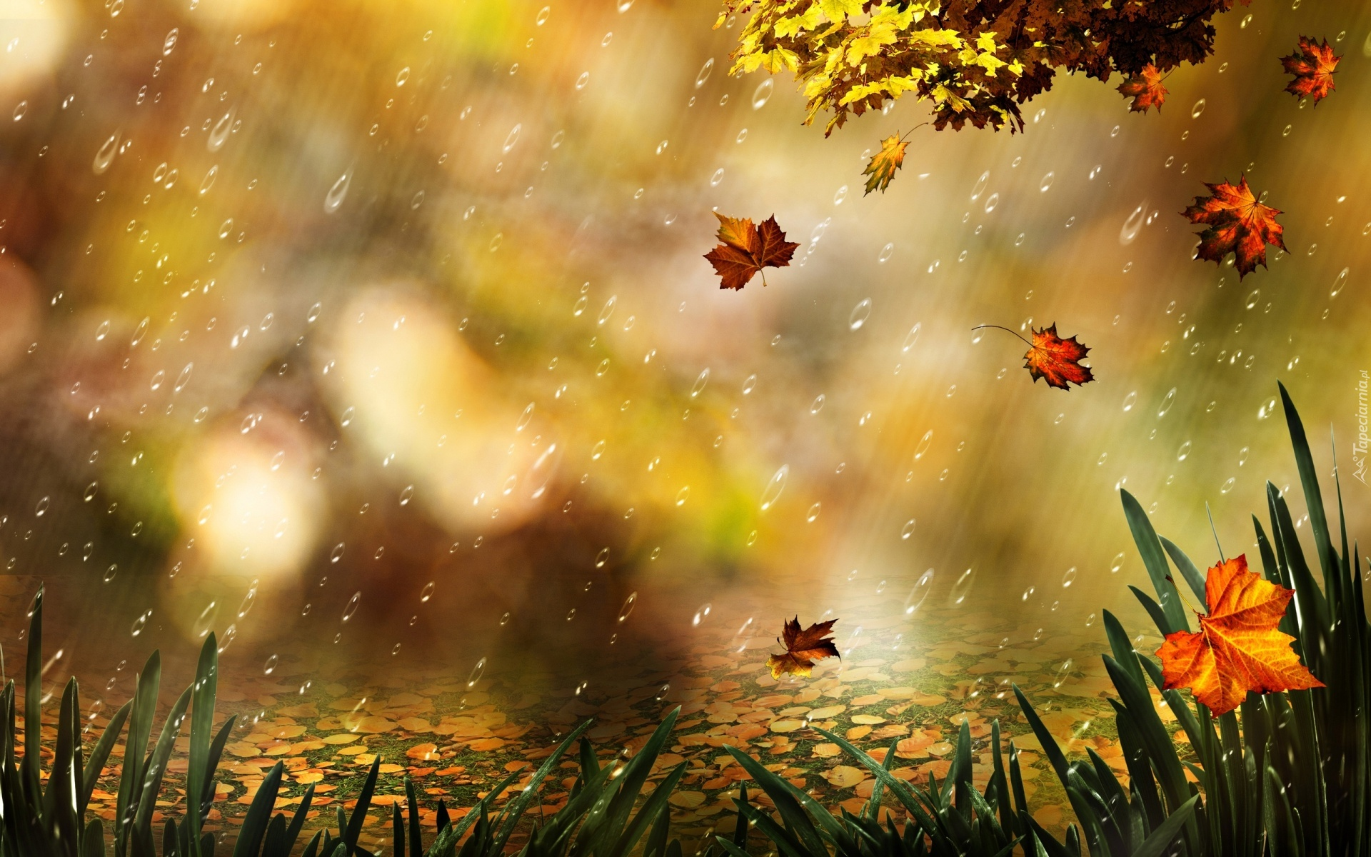 Znalezione obrazy dla zapytania liście deszcz tapety