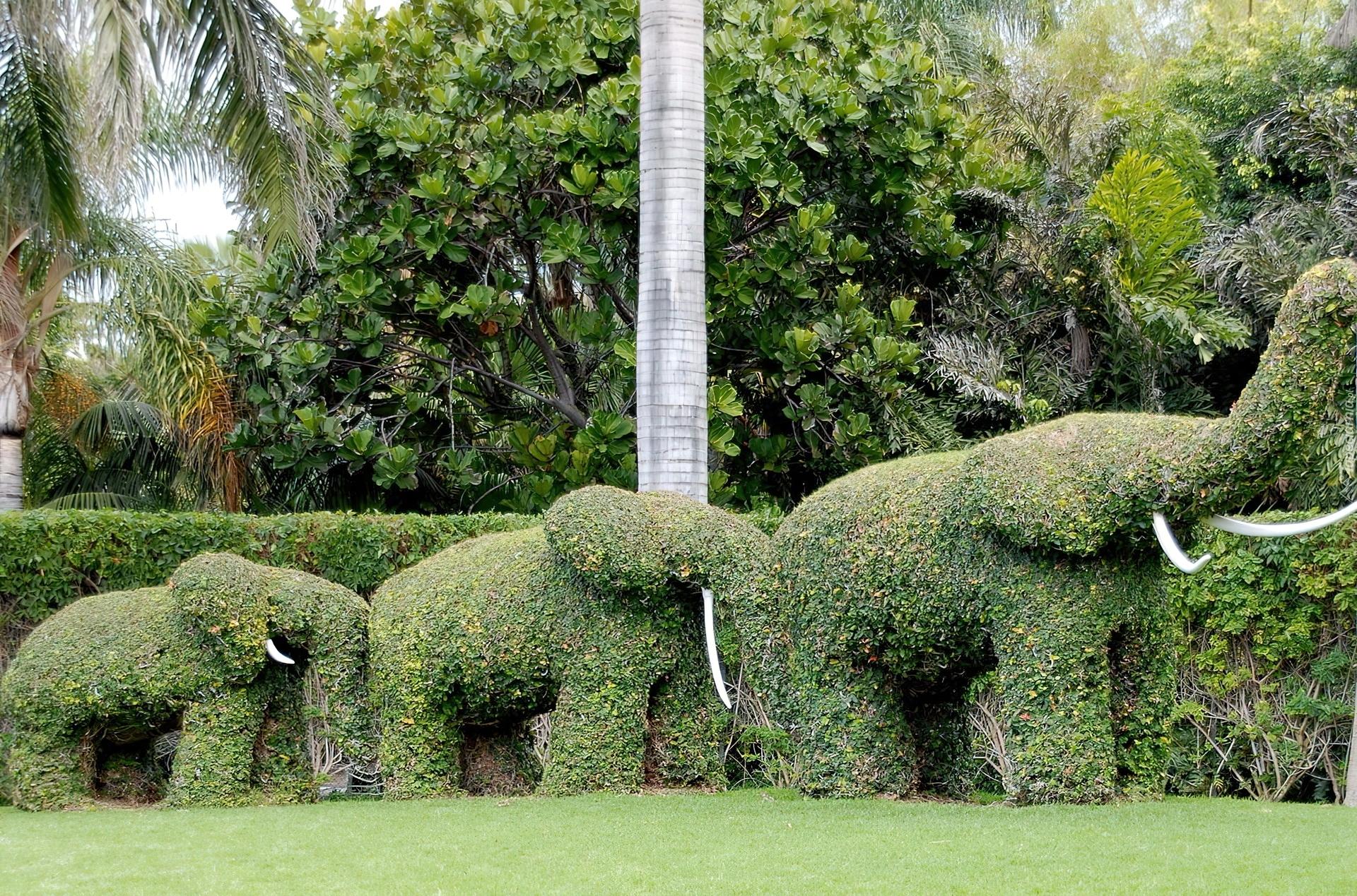 Зеленые скульптуры топиари своими руками каркасы