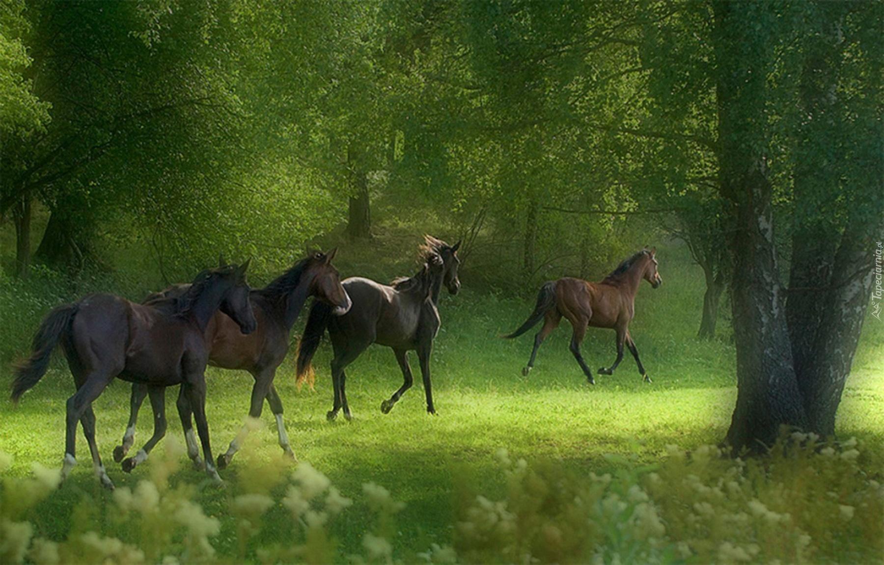 Гнедая лошадь Самый красивый конь