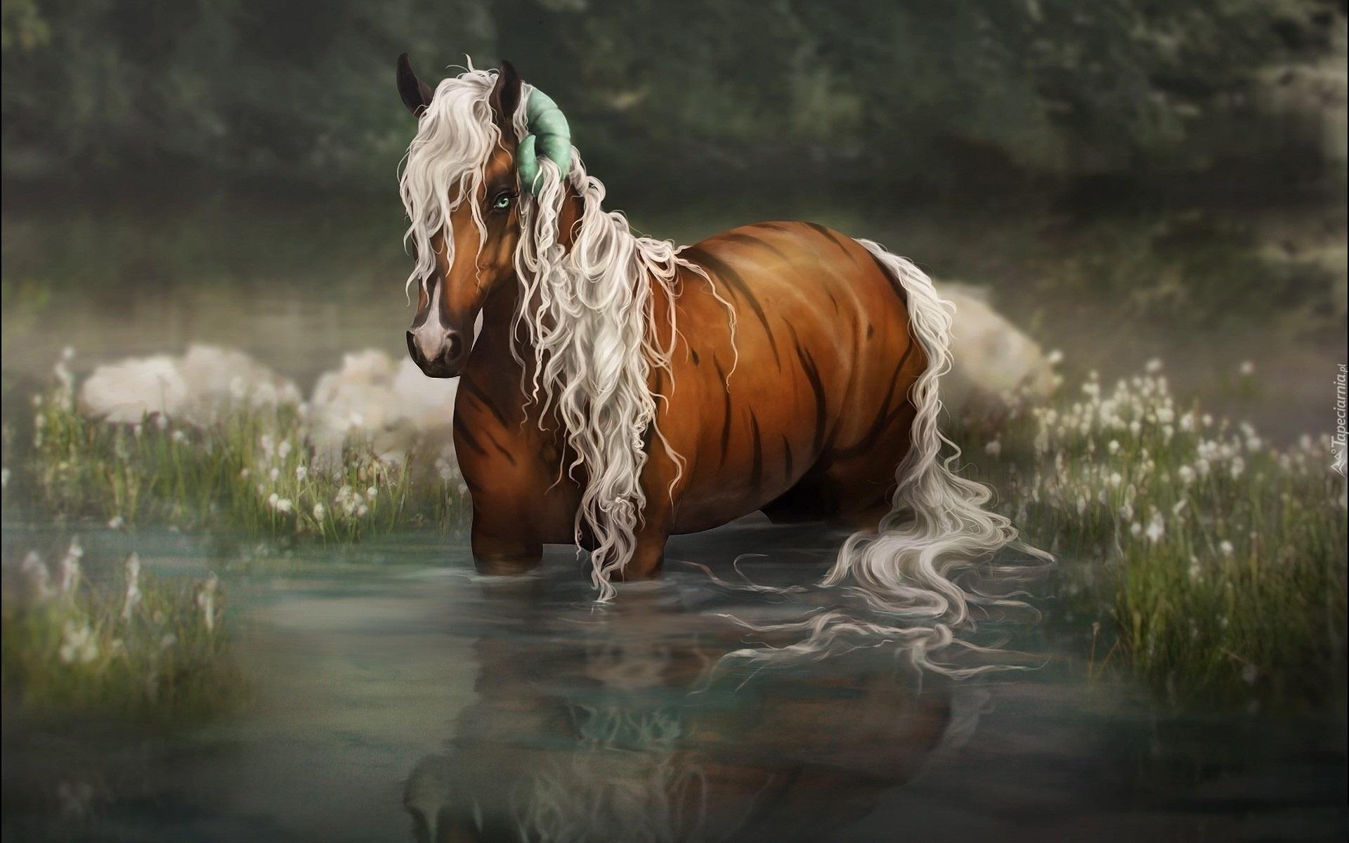 hd фото лошади