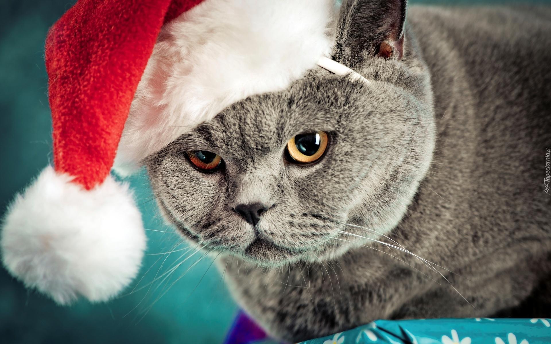 Скачать крутые картинки с котами