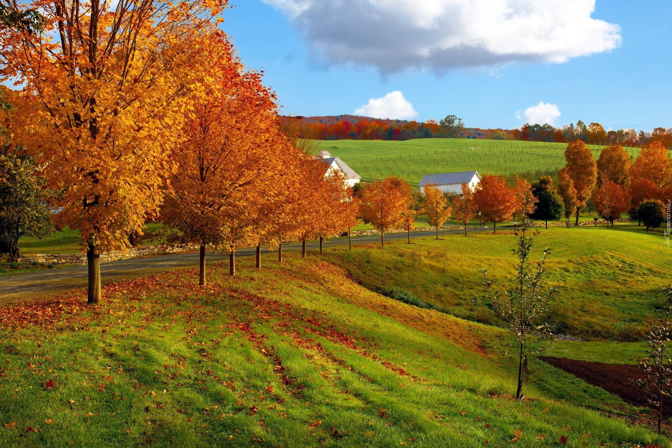 Jesie Krajobraz Drzewa Ka