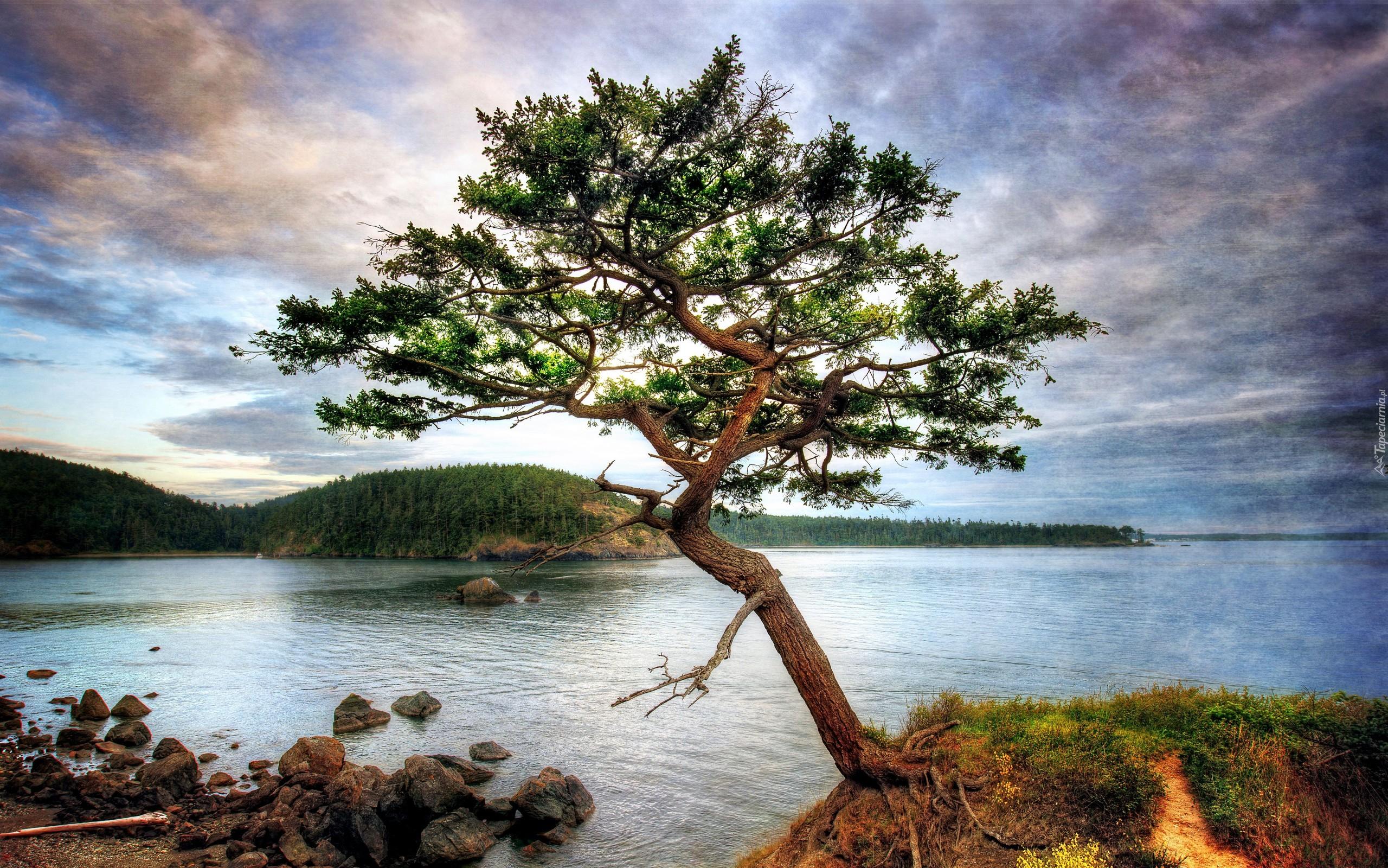 Rzeka kamienie for Beautiful drawings of trees