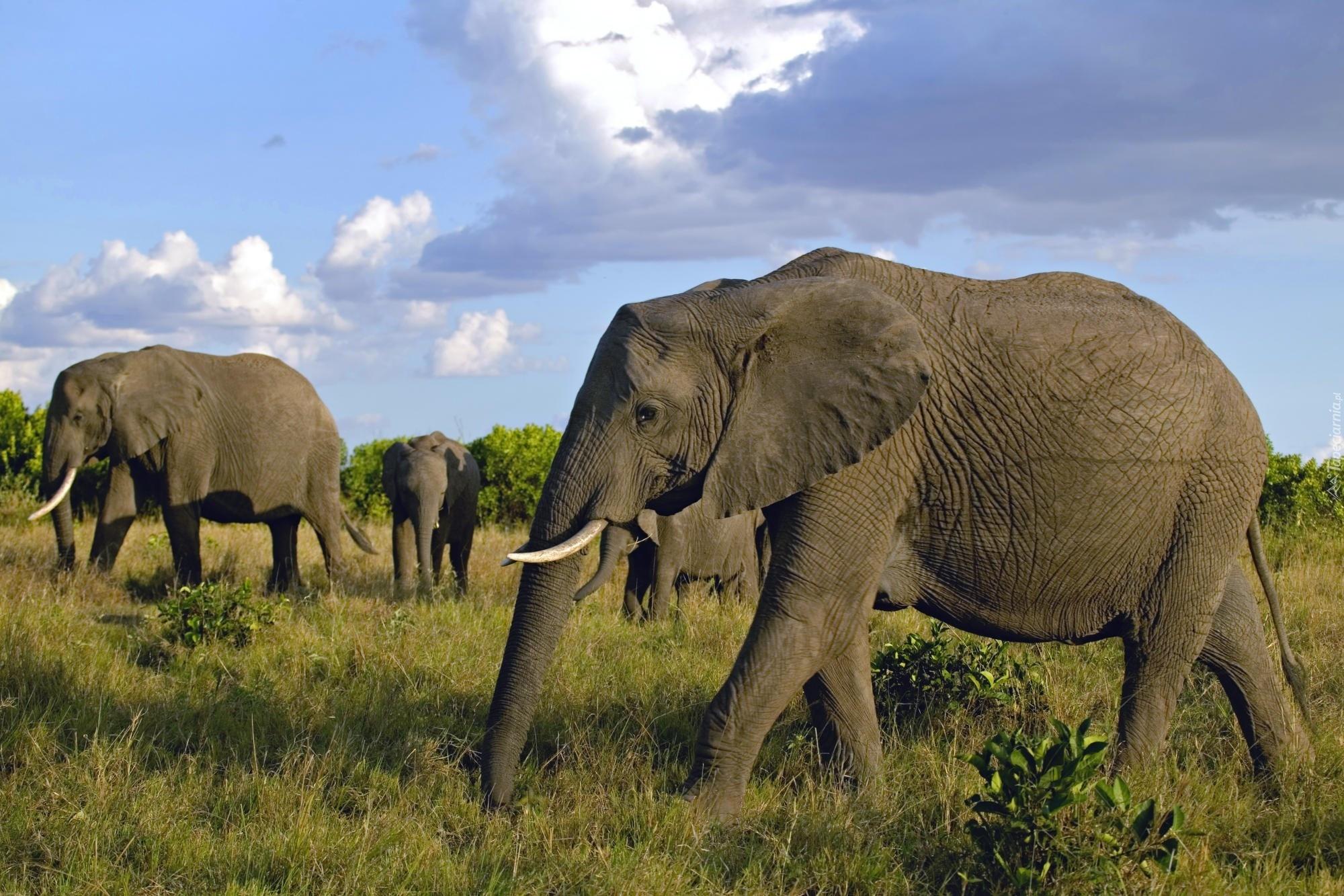 Masai Mara Game Reserve, Kenya  № 3362294 бесплатно
