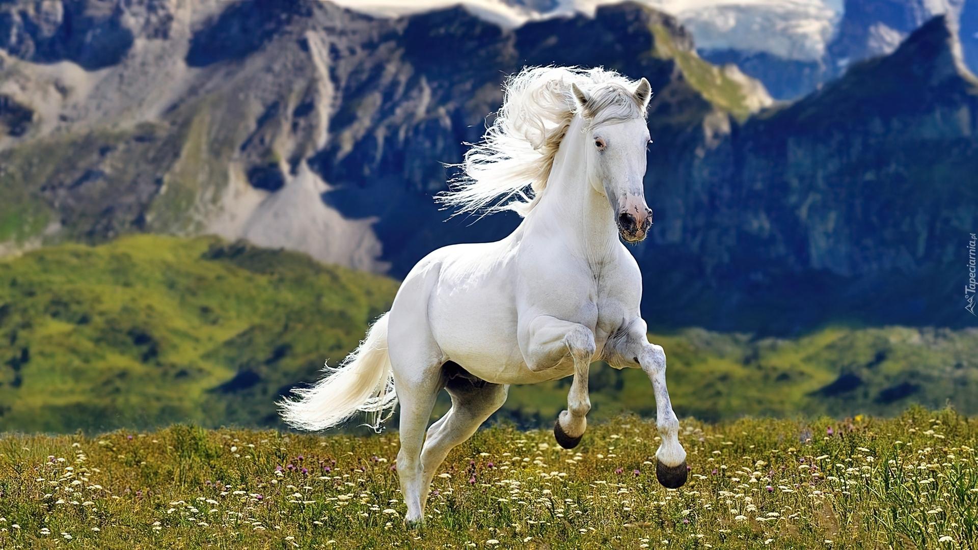 Лошадь в цветах  № 3117235  скачать