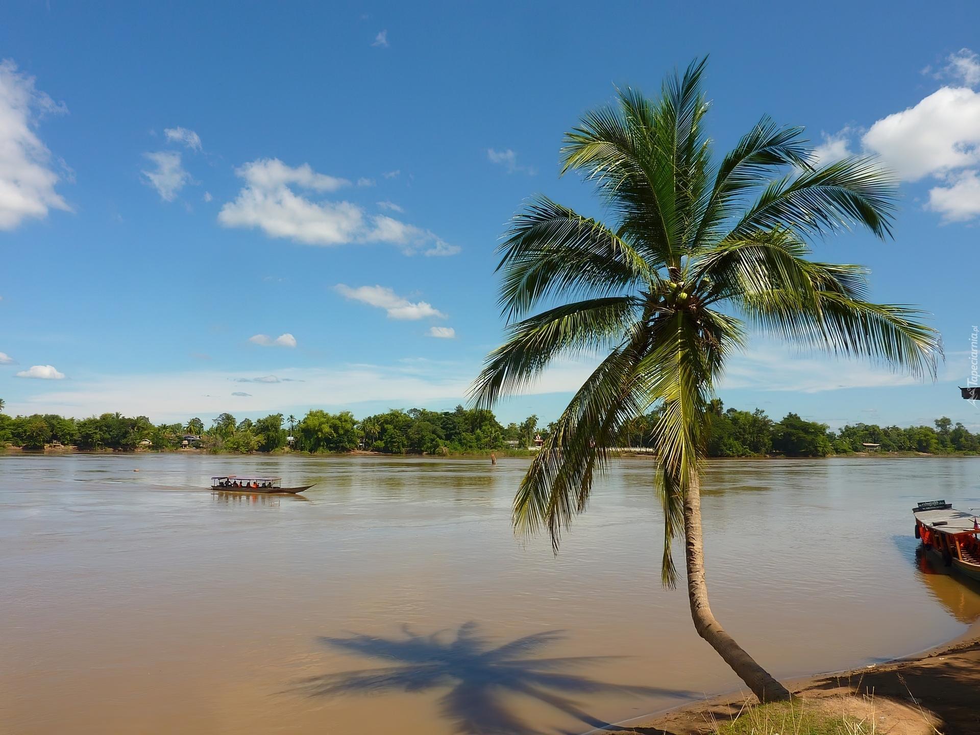 Rzeka, Amazonka, Brzeg, Palma, Brazylia