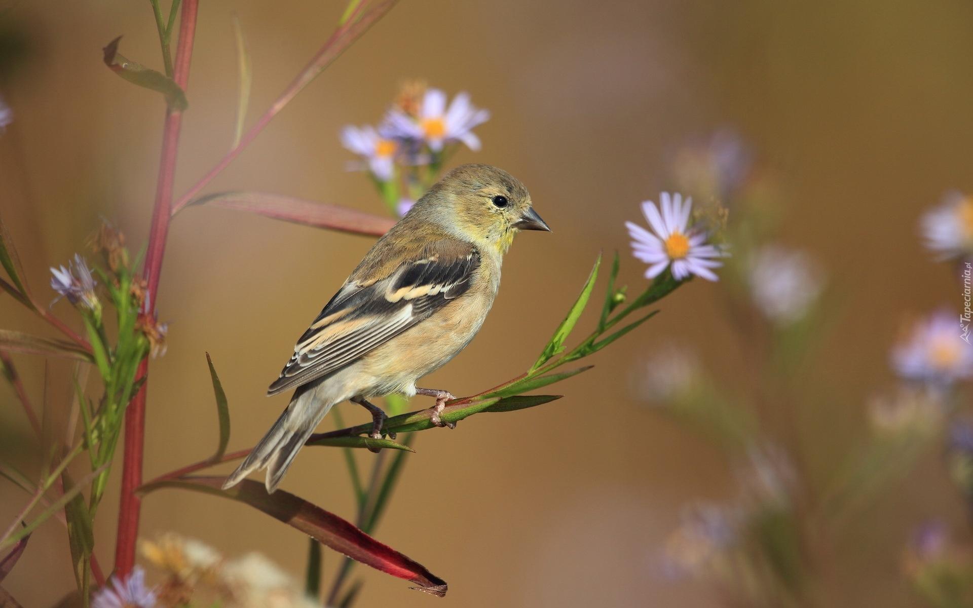 природа птицы животные весна  № 290771 без смс