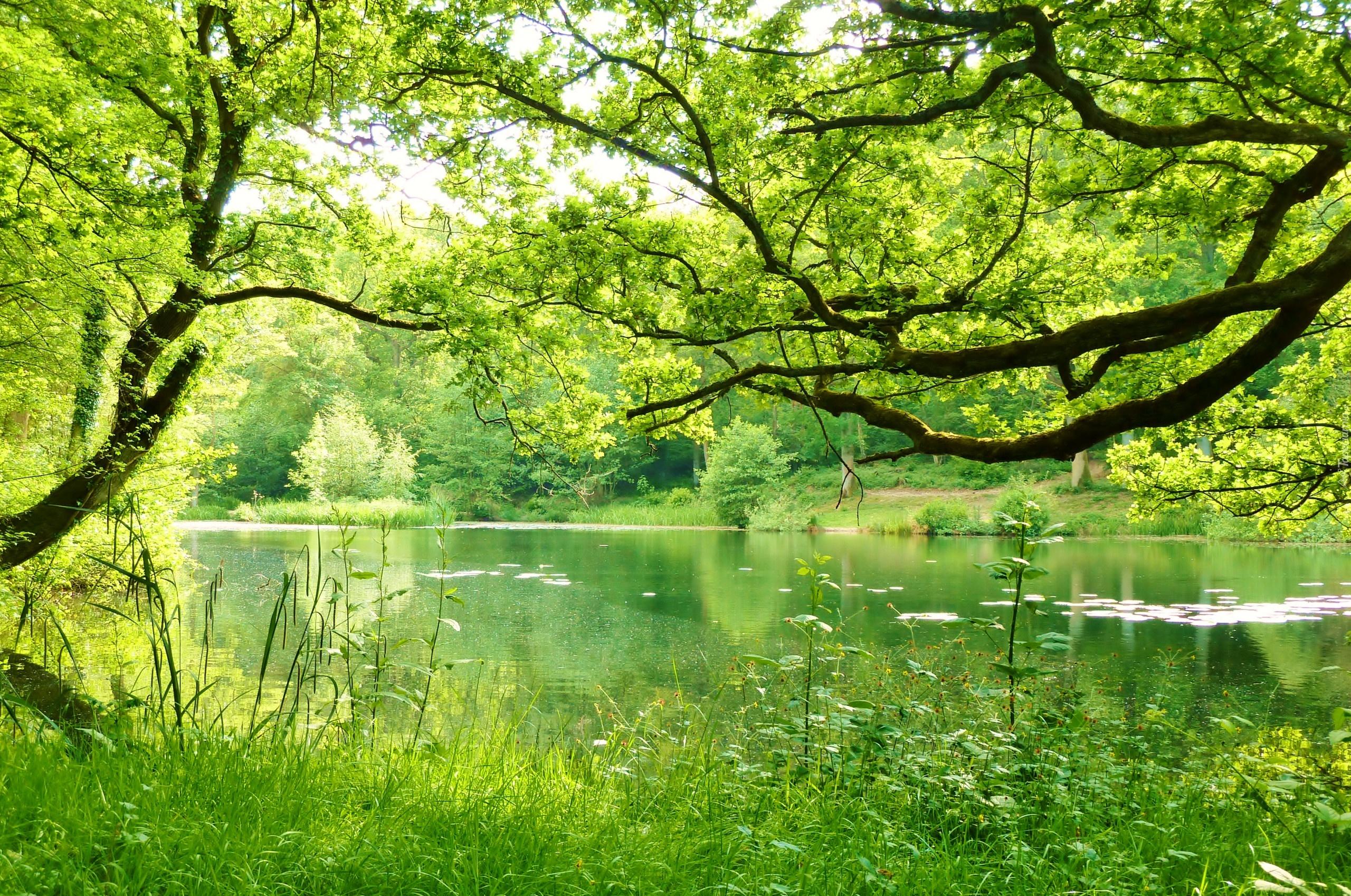 Лес озеро деревья  № 2404493  скачать