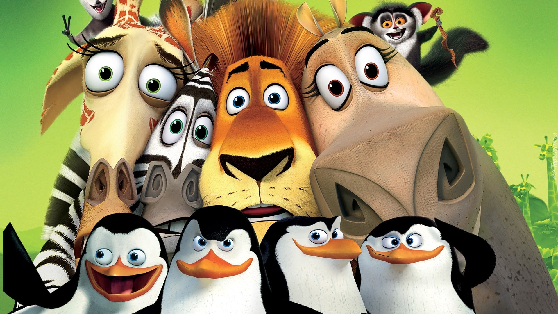madagaskar yrafa zebra lew hipopotam lemur pingwiny. Black Bedroom Furniture Sets. Home Design Ideas
