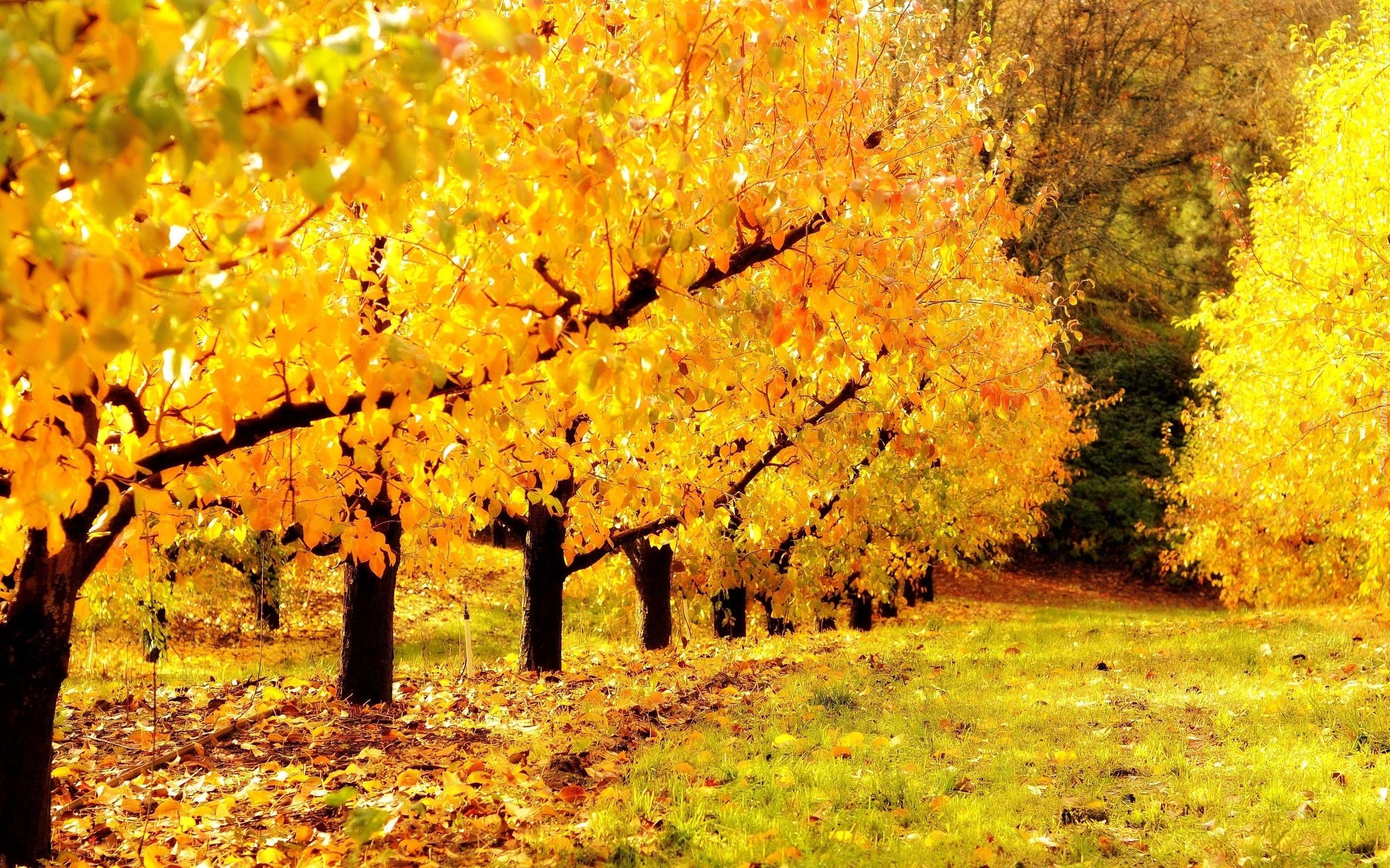Могите мне найти золотую осень на картинке 3