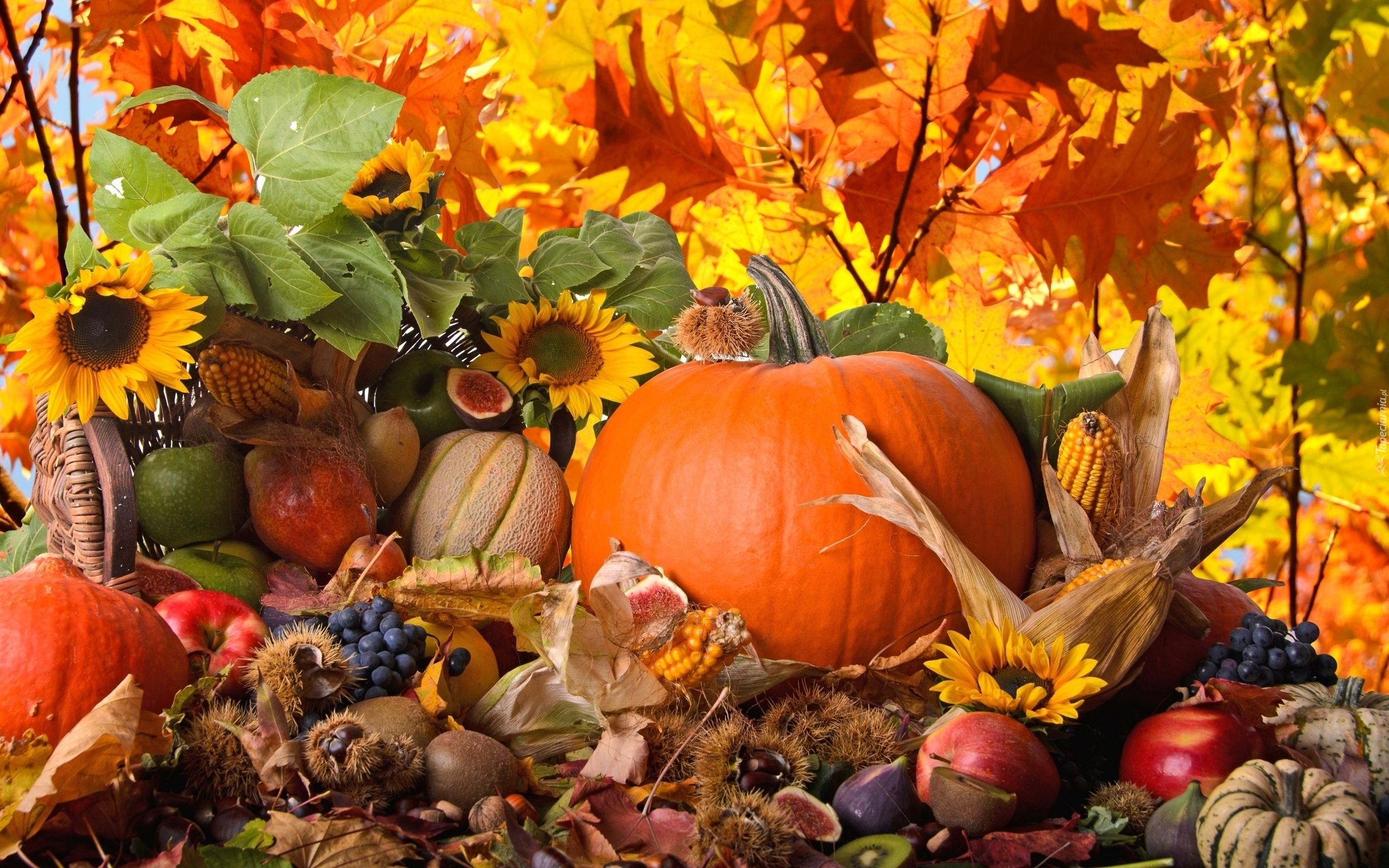harvest thanksgiving desktop - photo #9