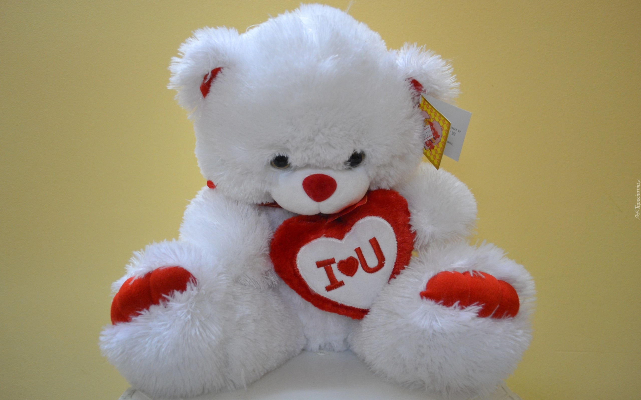 teddy bear love wallpaper hd