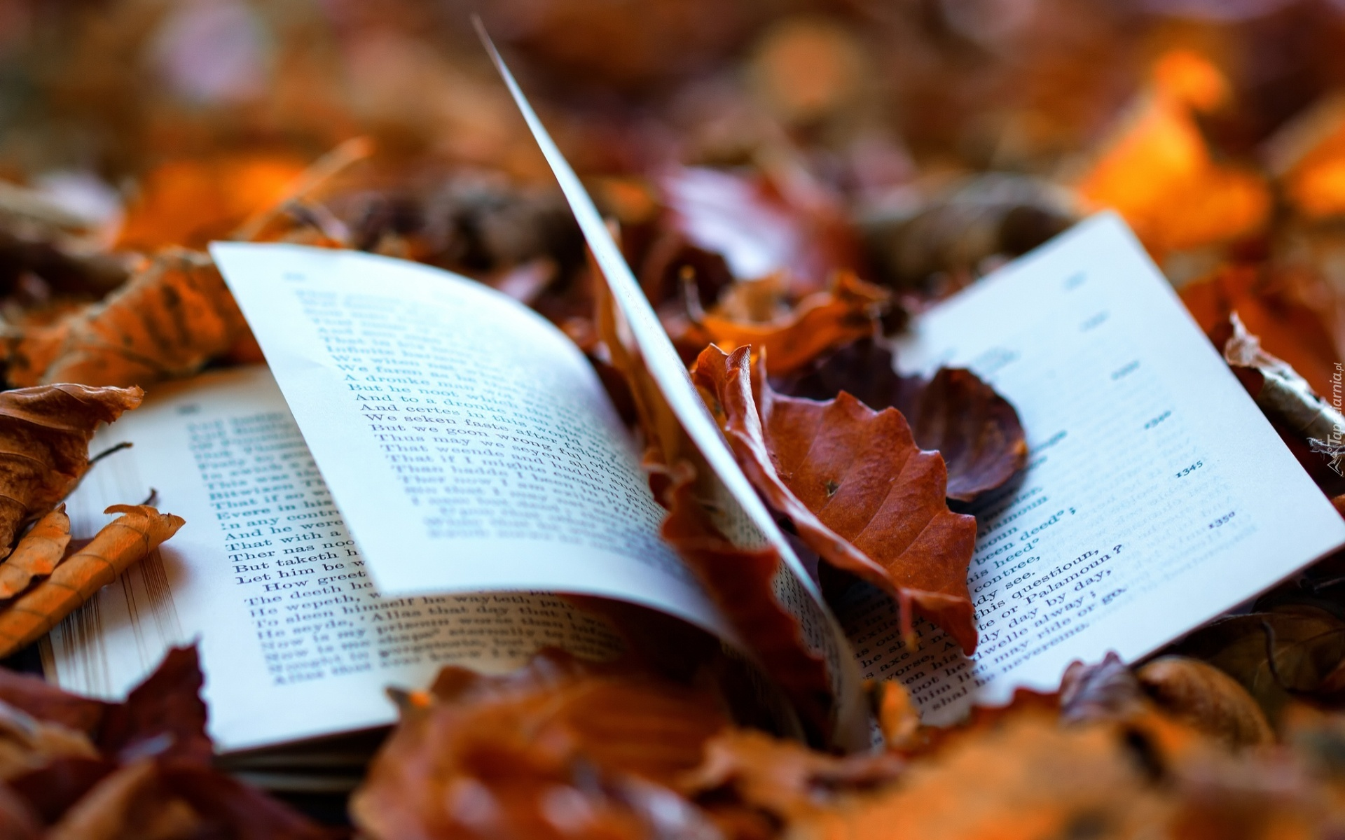 Заставка на рабочий стол осенние листья 1