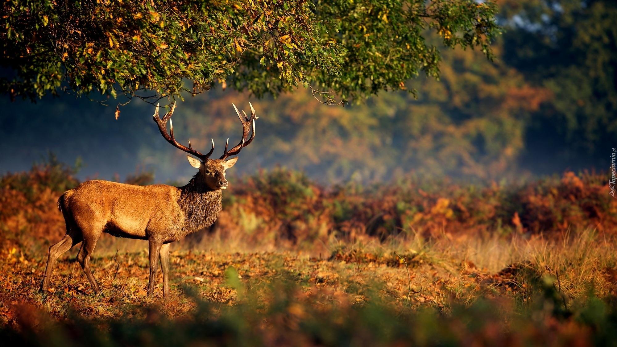 3d deer nature live wallpaper
