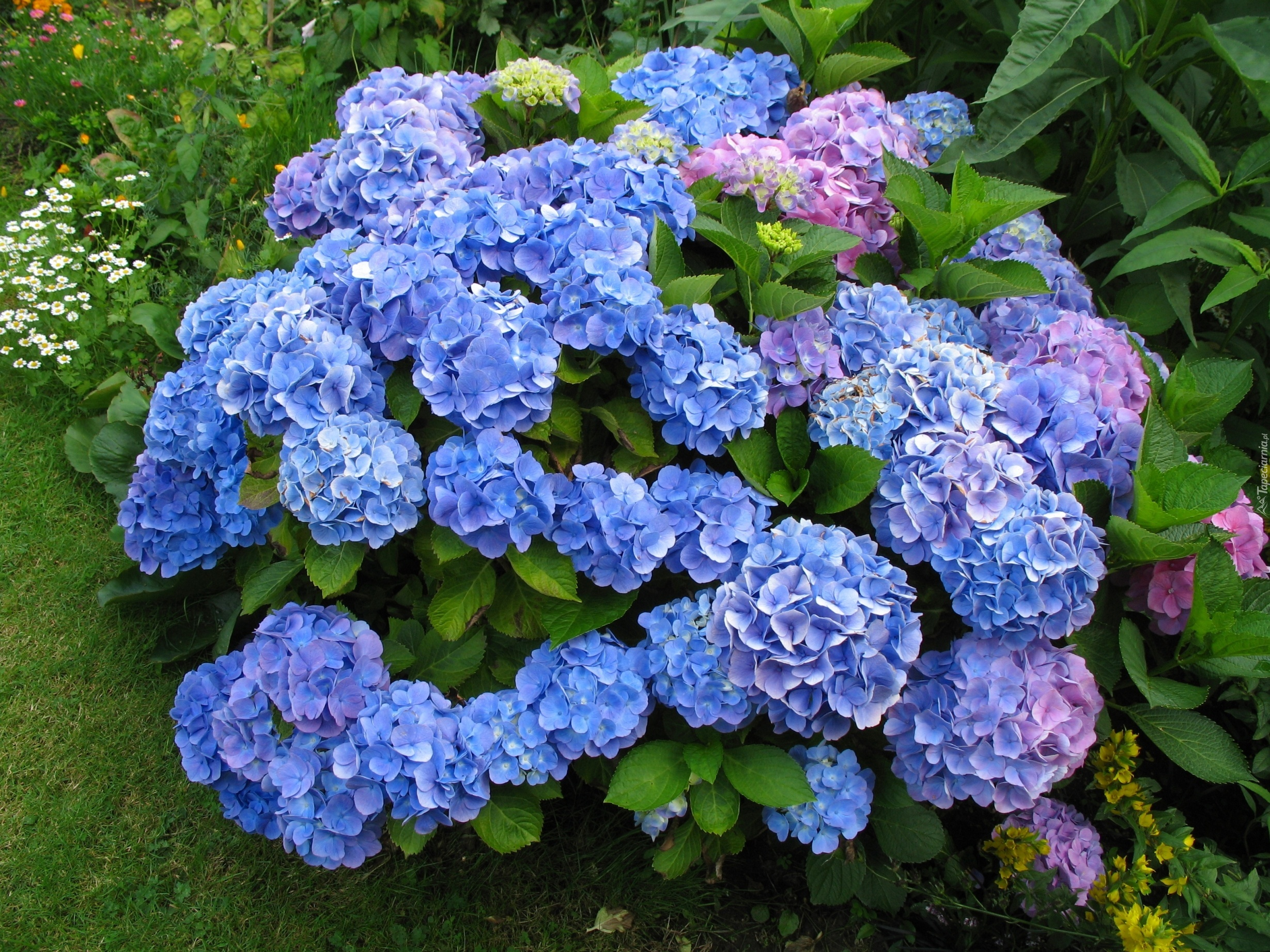 Фото самые красивые и дорогие цветы 3
