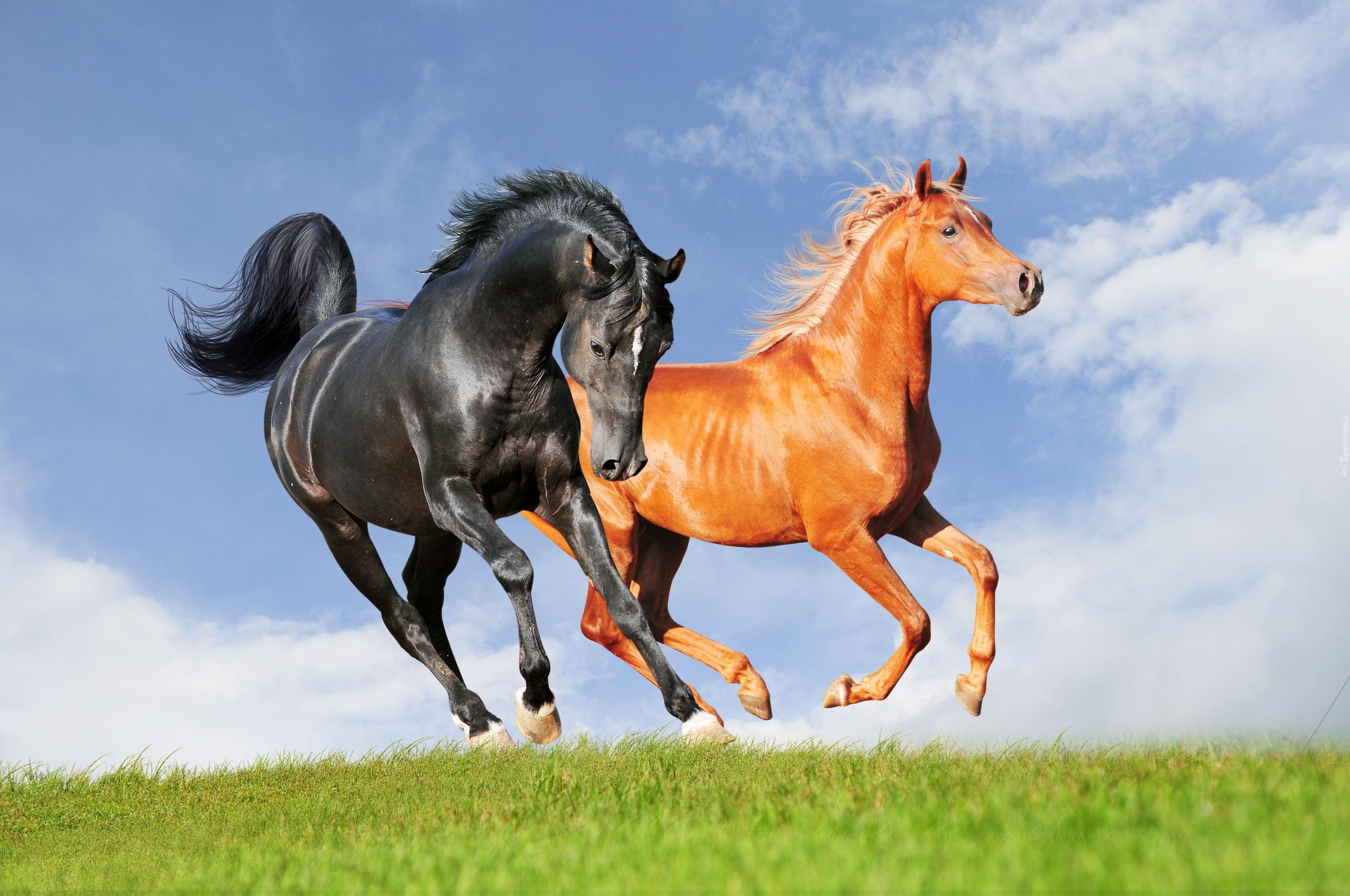 Обои для рабочего стола лошади кони