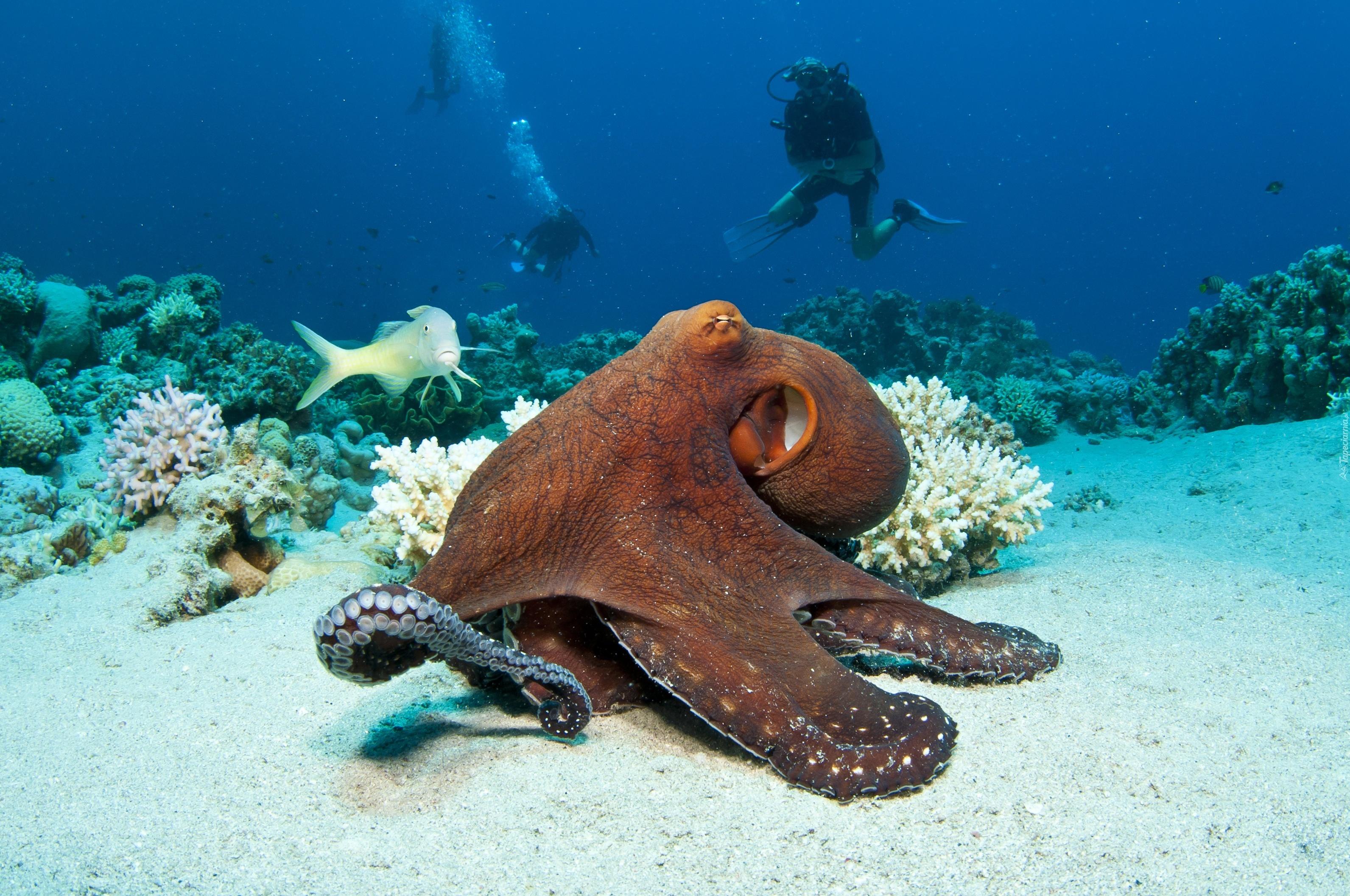 Животный подводный мир 4