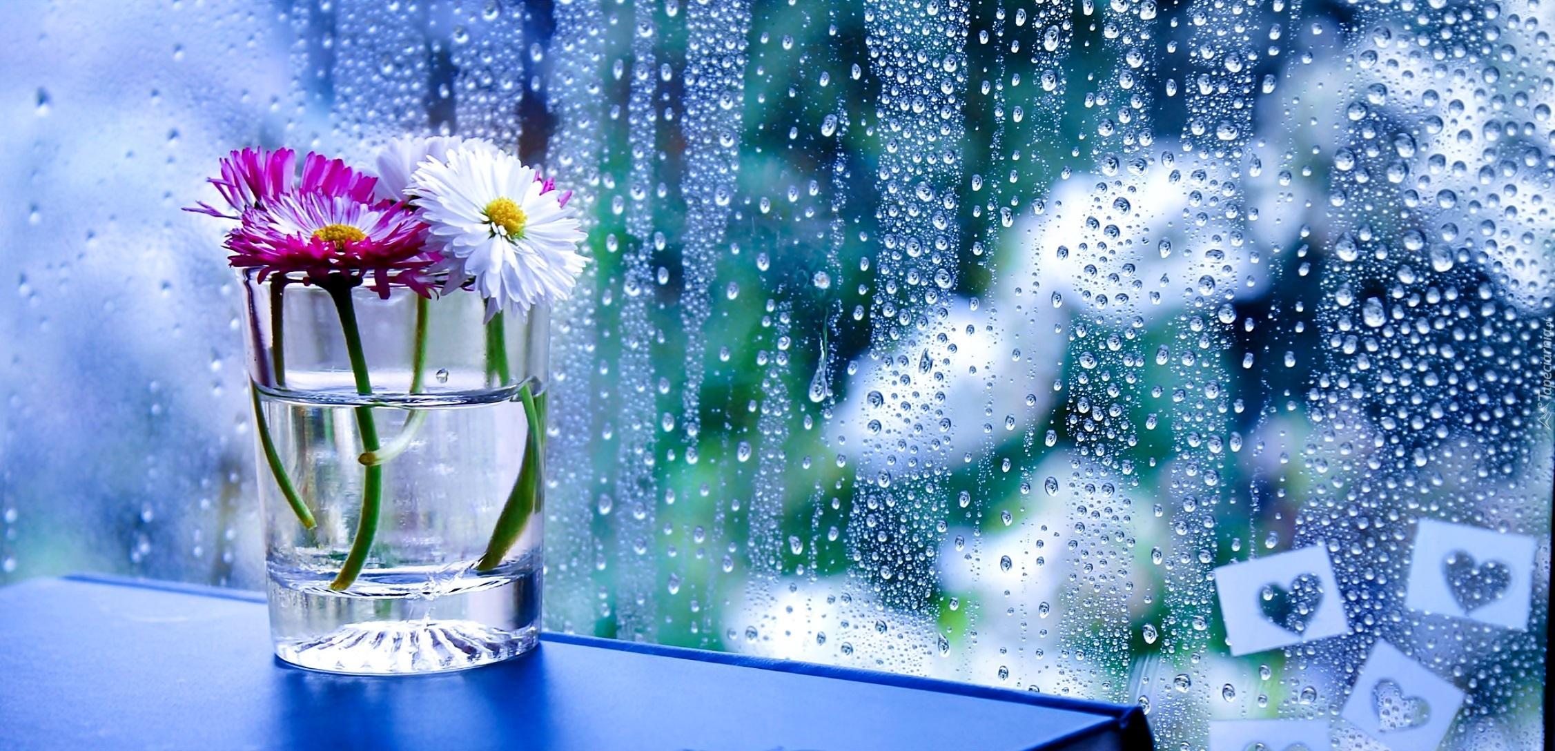 Kwiaty, Szyba, Deszcz