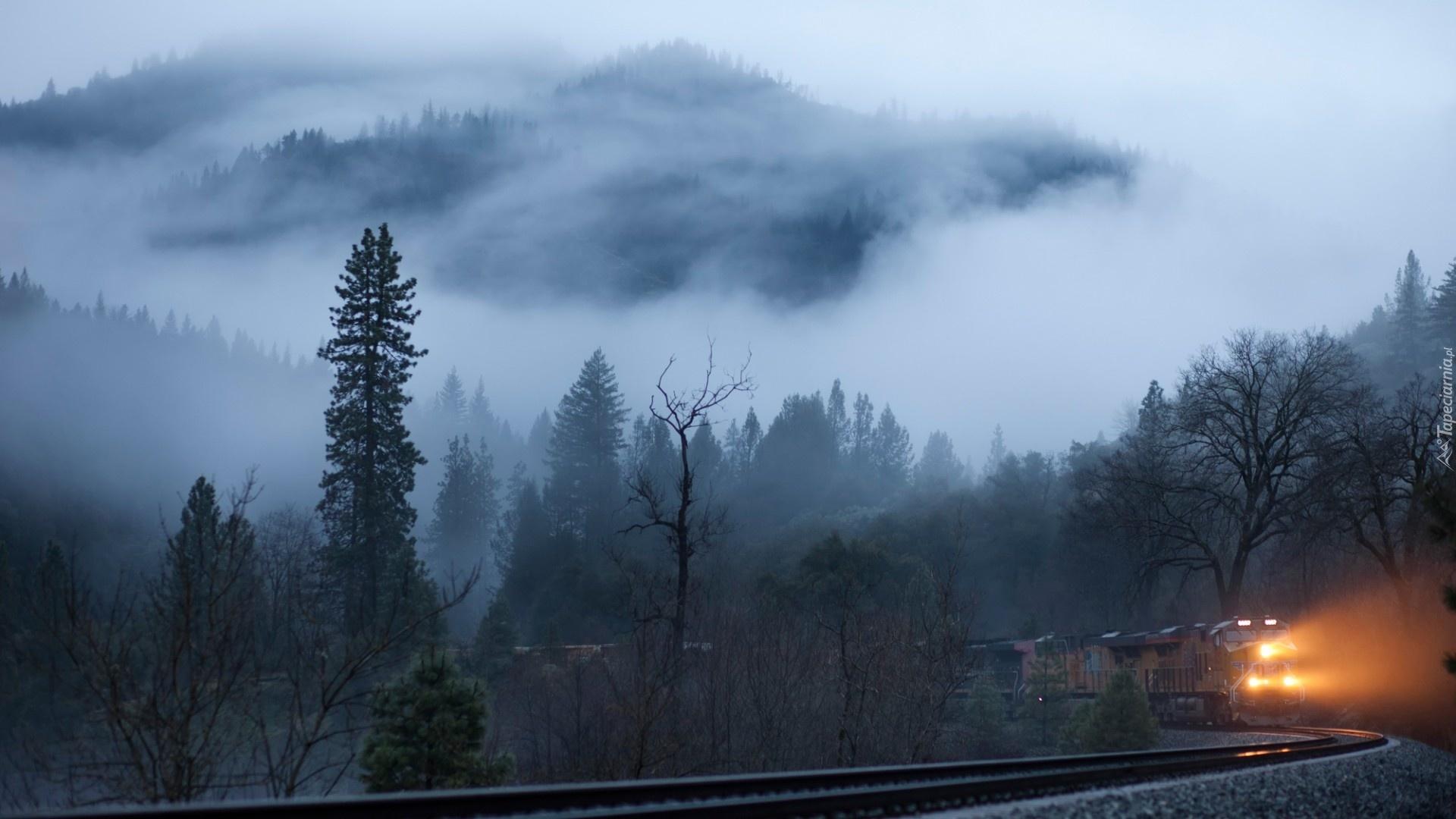 Красивый лес в тумане  обои для рабочего стола картинки