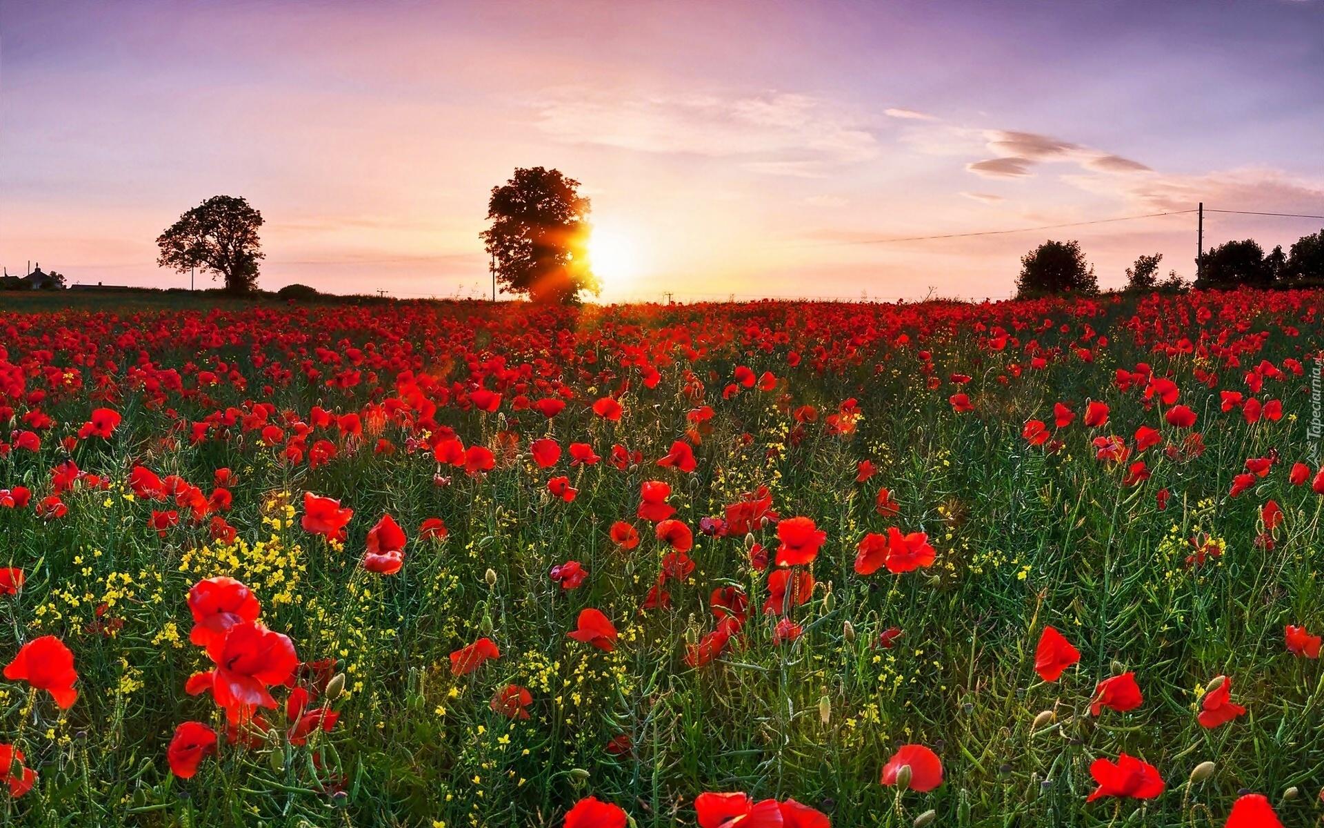 kwiaty na bloga wiosenne kwiaty kwiaty ogrodowe polne kwiaty wybierz