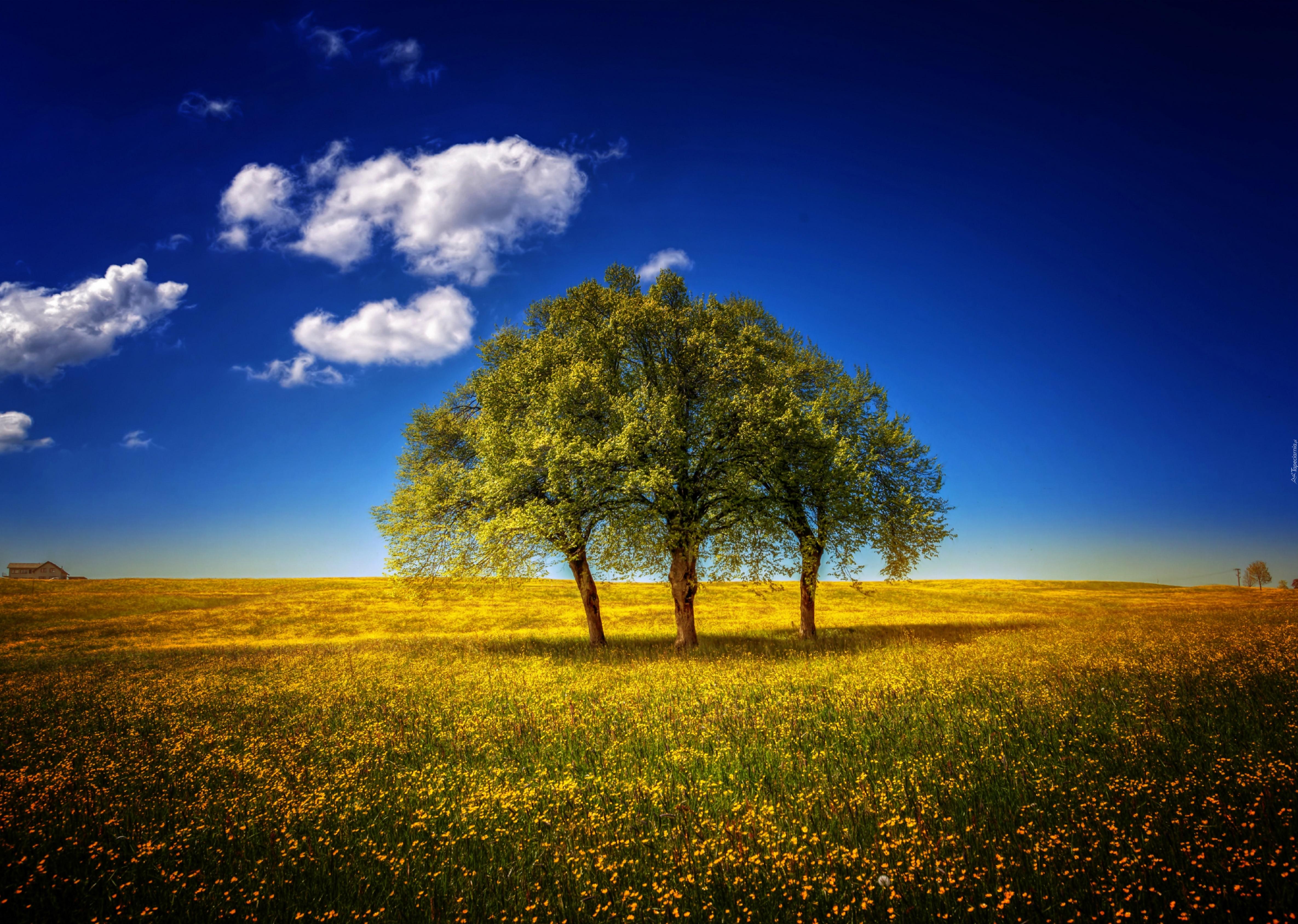 природа небо облака деревья поле nature the sky clouds trees field  № 243704  скачать
