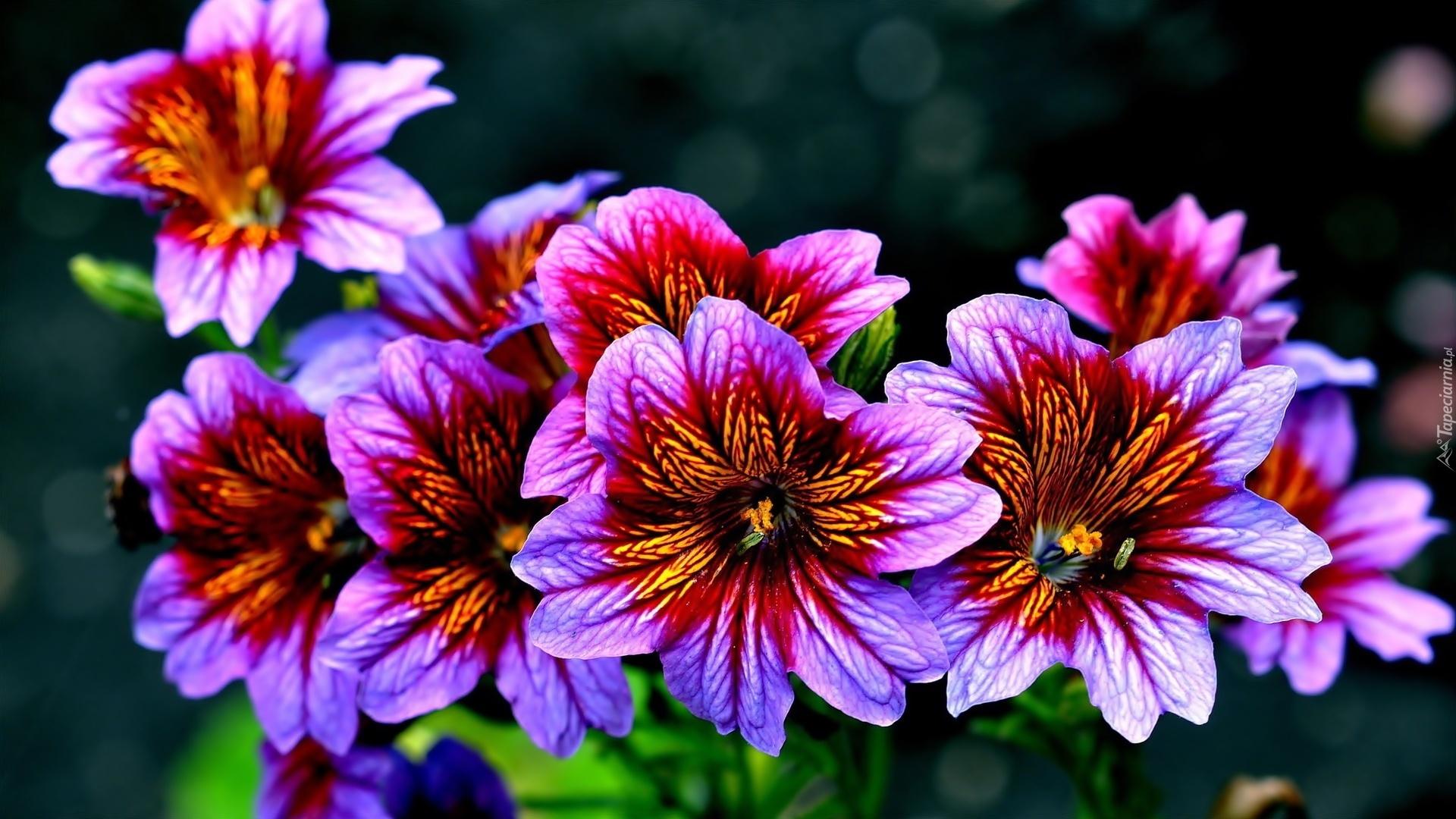 http://www.tapeciarnia.pl/tapety/normalne/242299_kwiaty_purpurowe.jpg