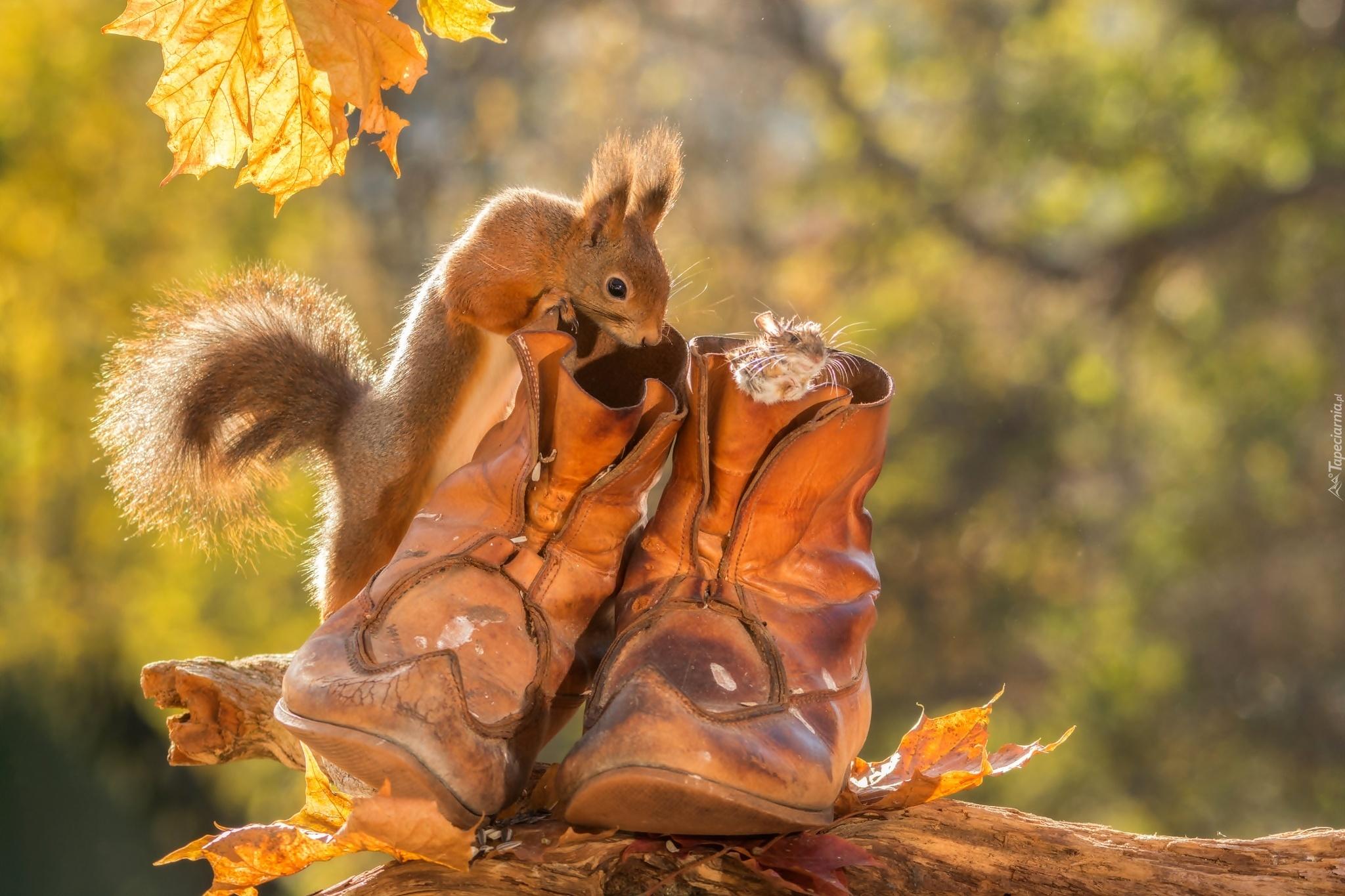Осенние картинки необычные