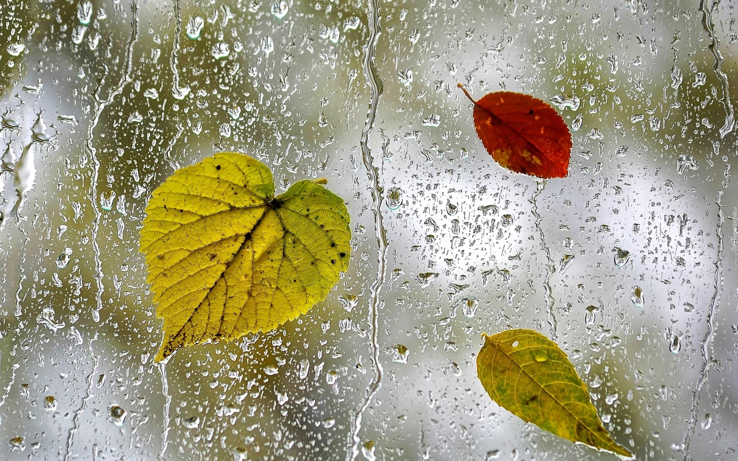 Znalezione obrazy dla zapytania deszcz liście tapety