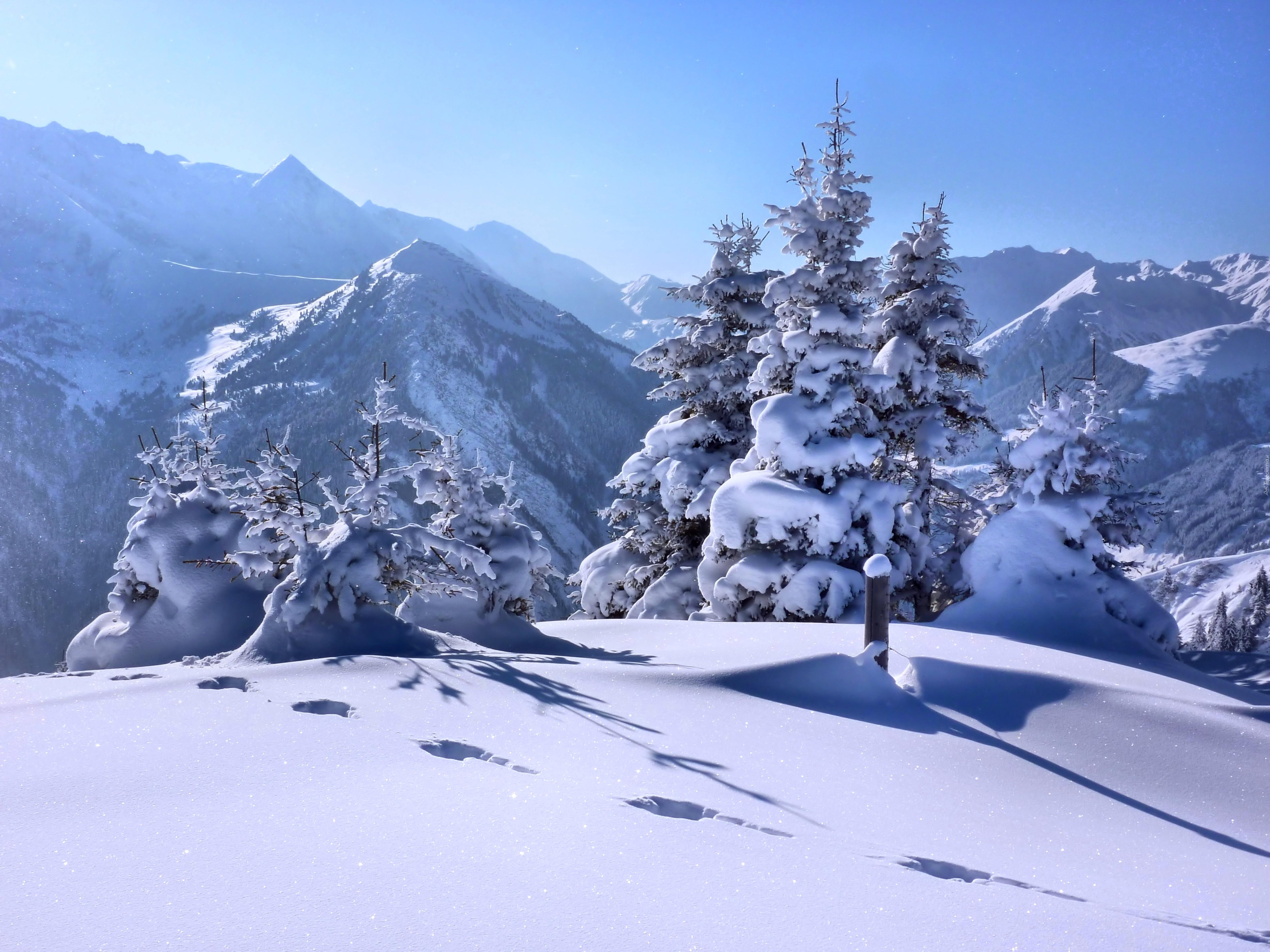 заснеженные деревья в горах  № 355870 без смс