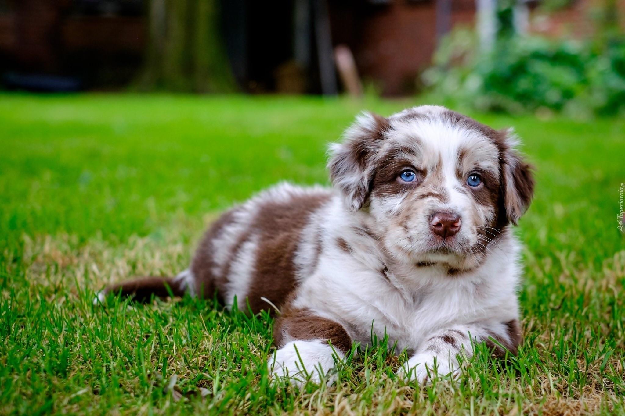 Royal Dogs: Rezerwacje