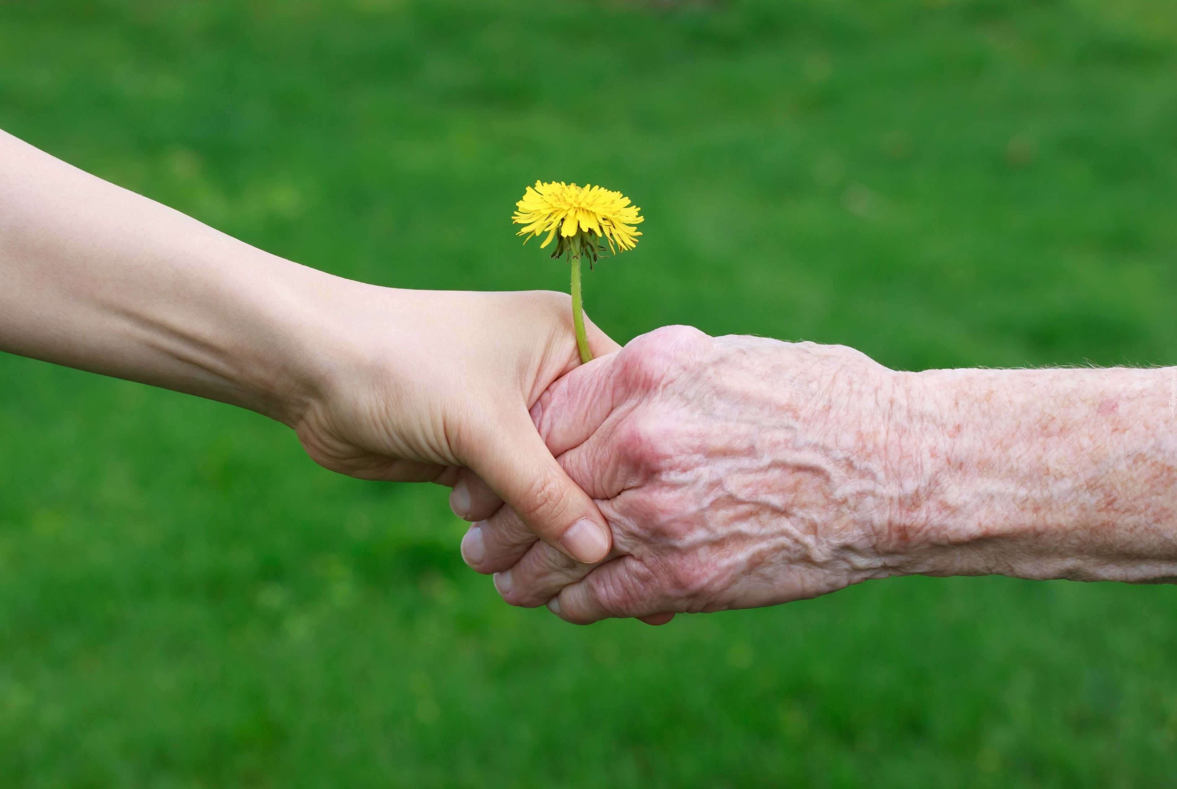 respect to elders essay in hindi