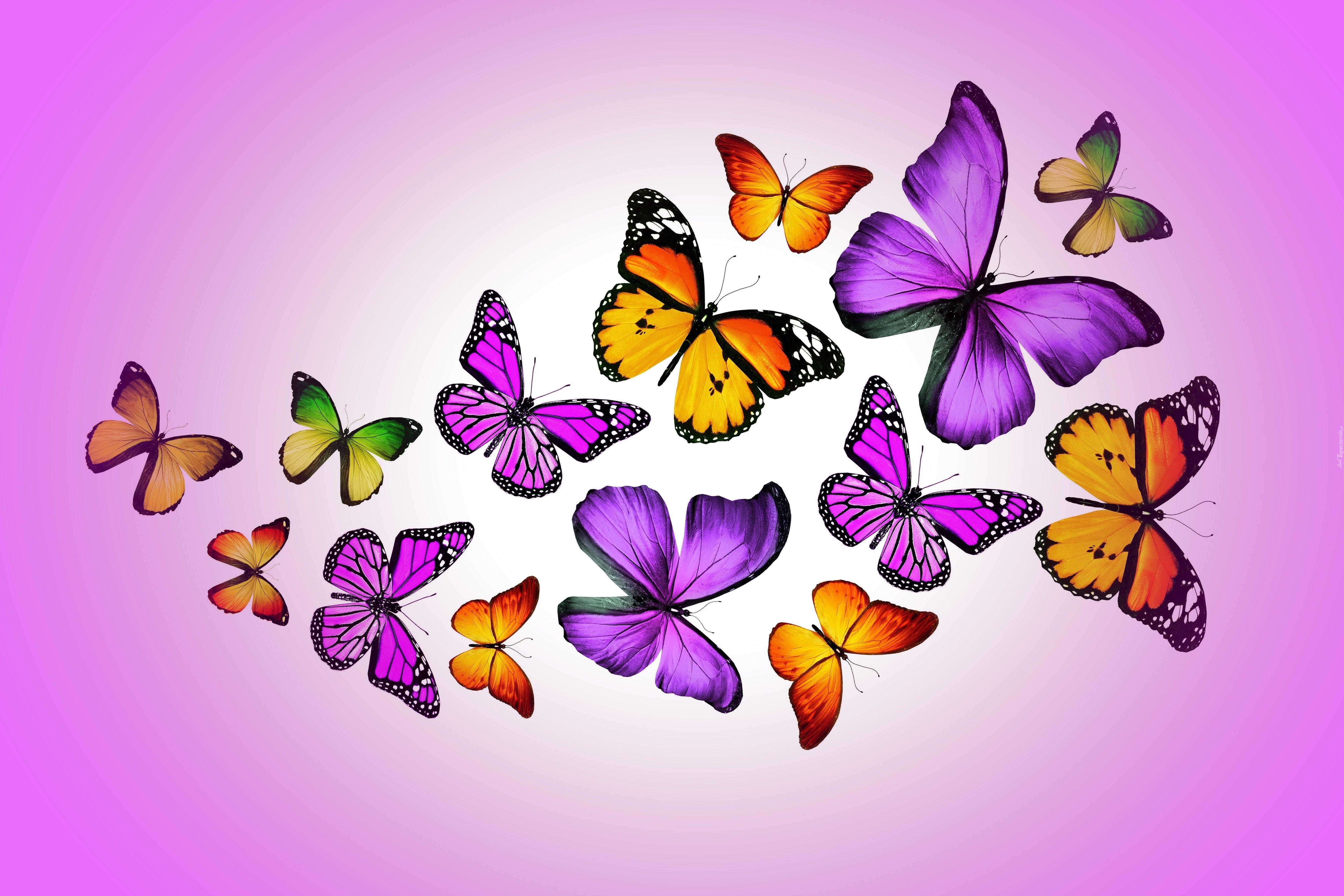 Motylki grafika 2d for Sfondi farfalle gratis