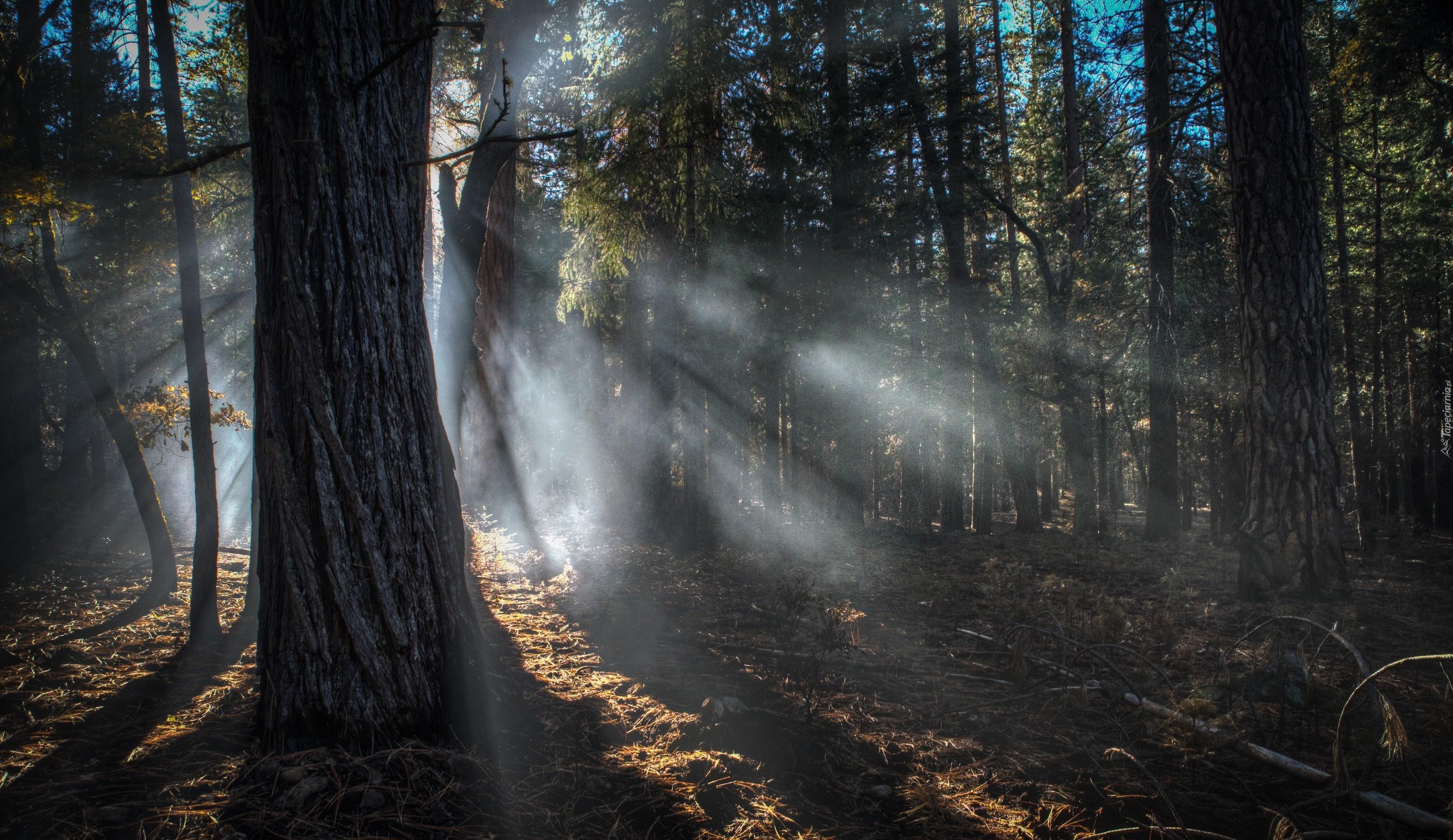 Znalezione obrazy dla zapytania Mgła tapety