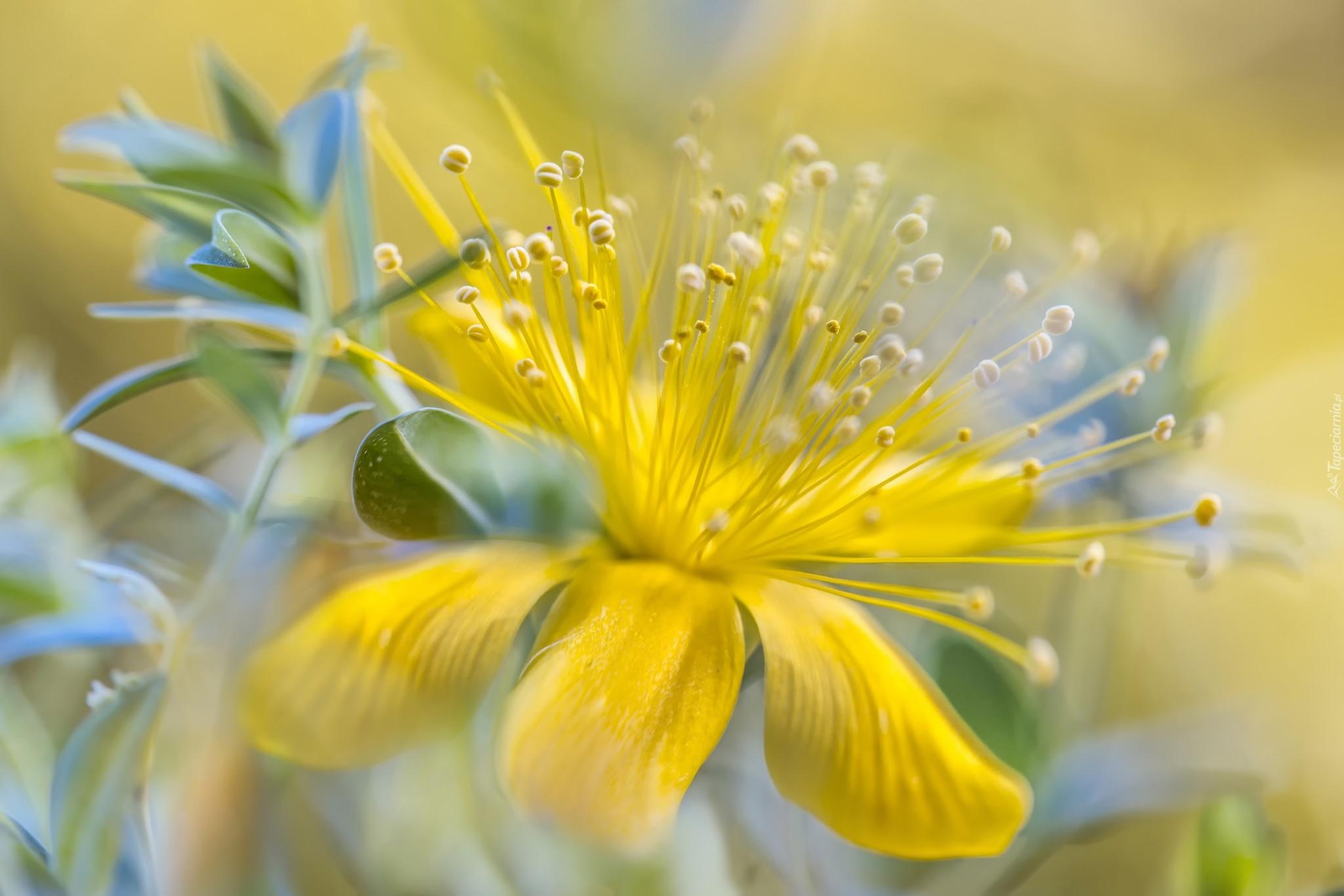 Желтые ромашки цветы желтые цветы размытость  № 3831075 бесплатно