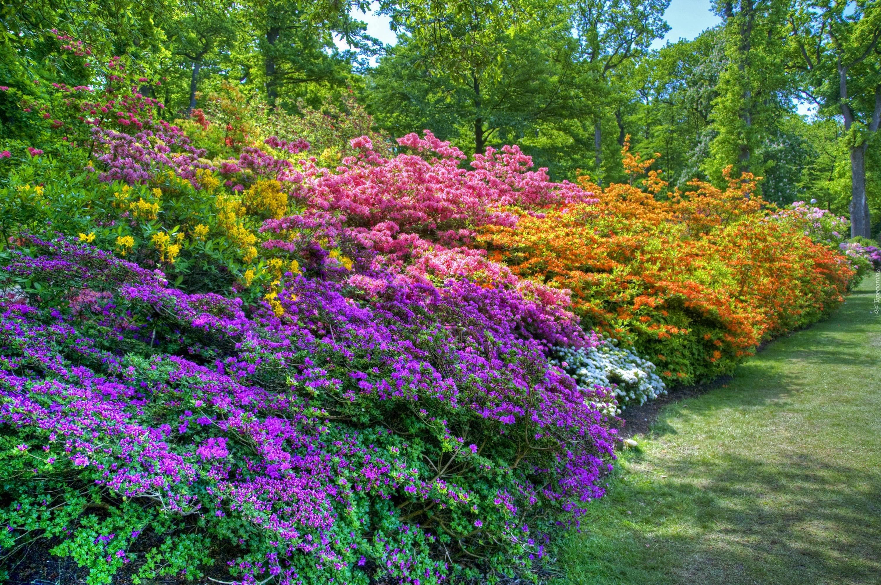 http://www.tapeciarnia.pl/tapety/normalne/267976_wiosna_krzewy_kwiaty.jpg