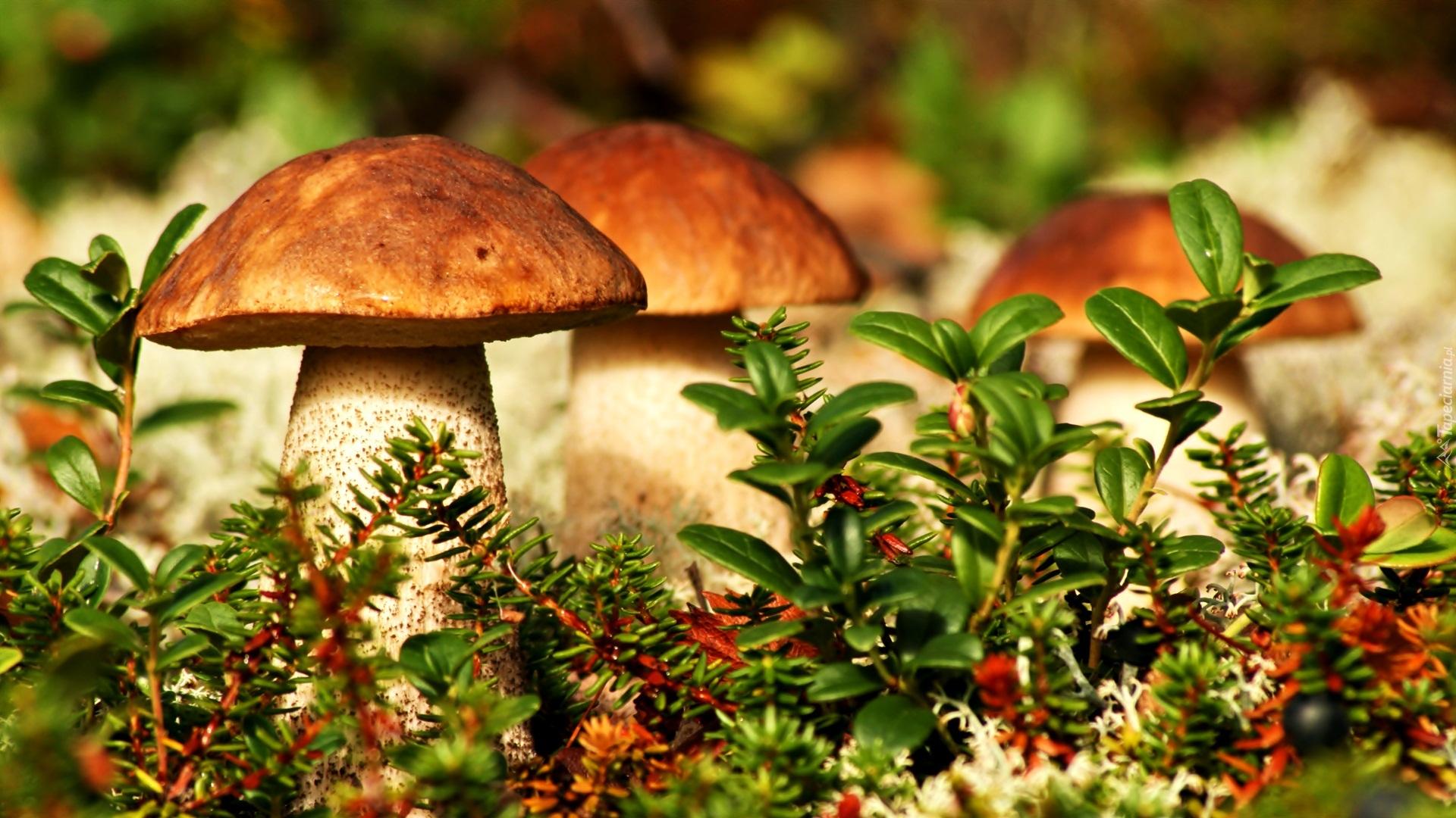 ᐈ Осень в деревне фото и картинки осень в деревне