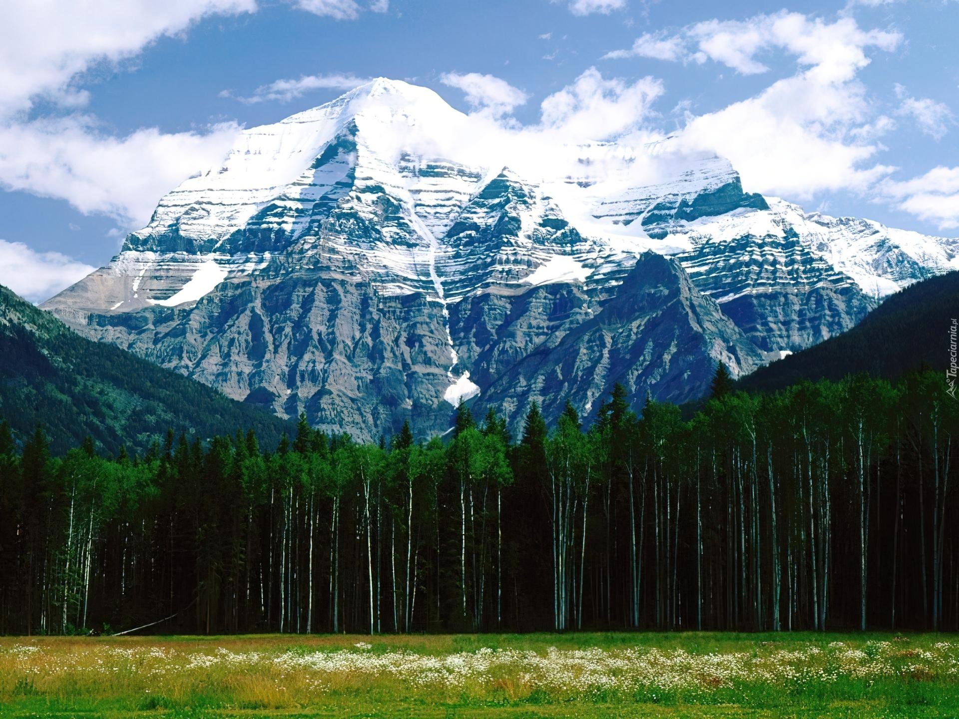 Kanada, góra, las