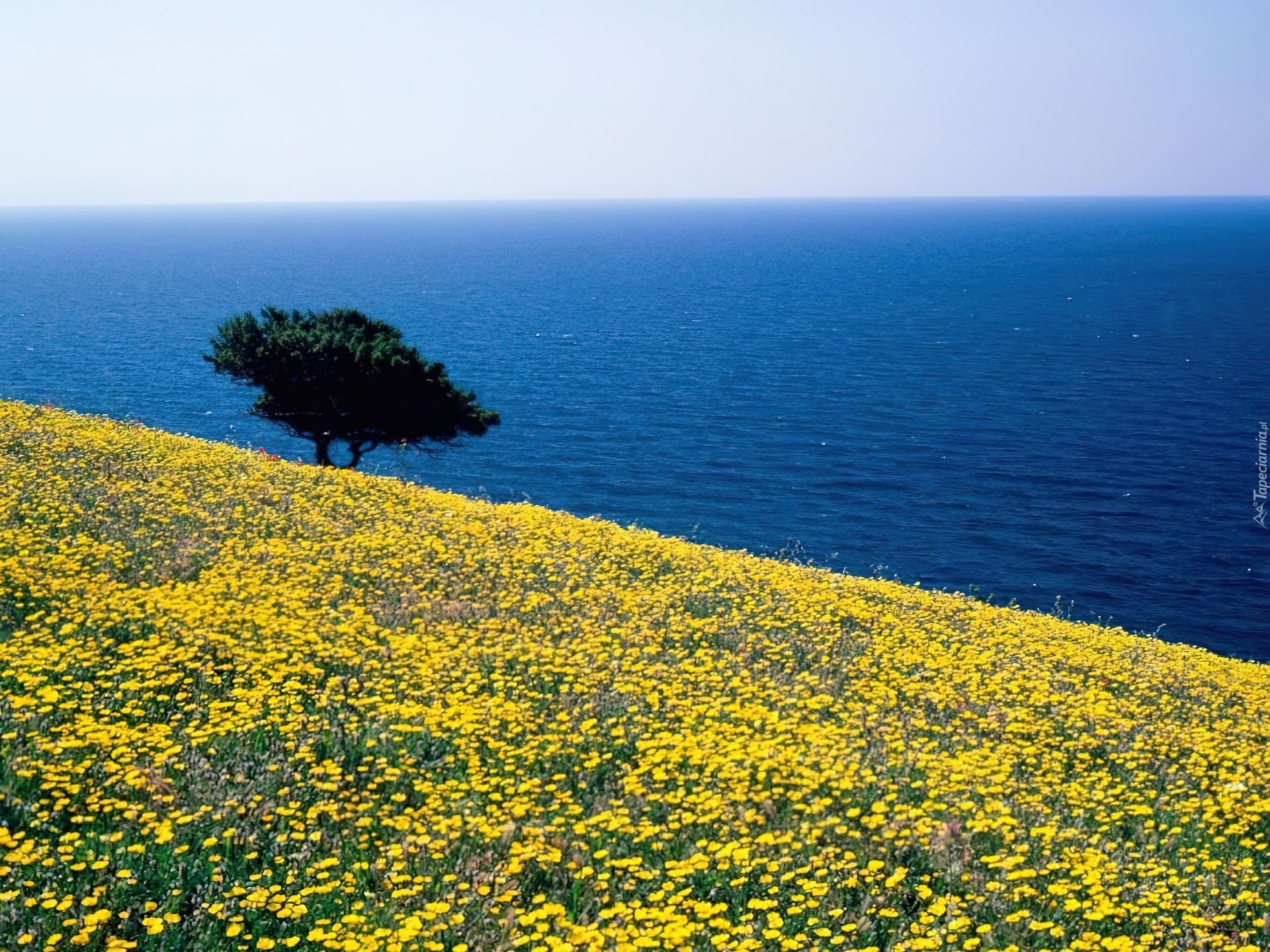 http://www.tapeciarnia.pl/tapety/normalne/4225_grecja_morze_laka.jpg