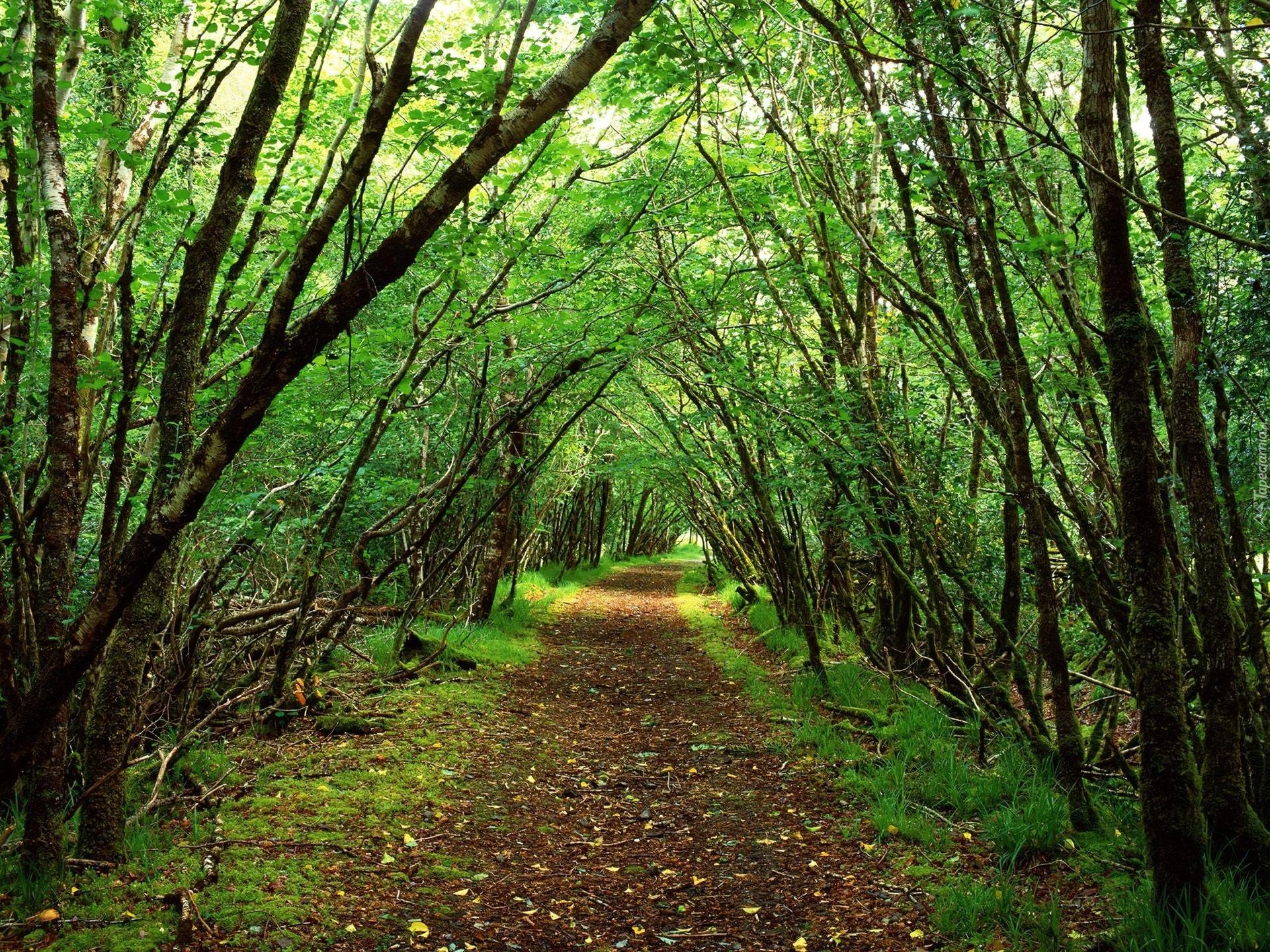 Rossacroo-na-loo Wood, Near Kilgarvan, County Kerry, Ireland  № 12710 загрузить