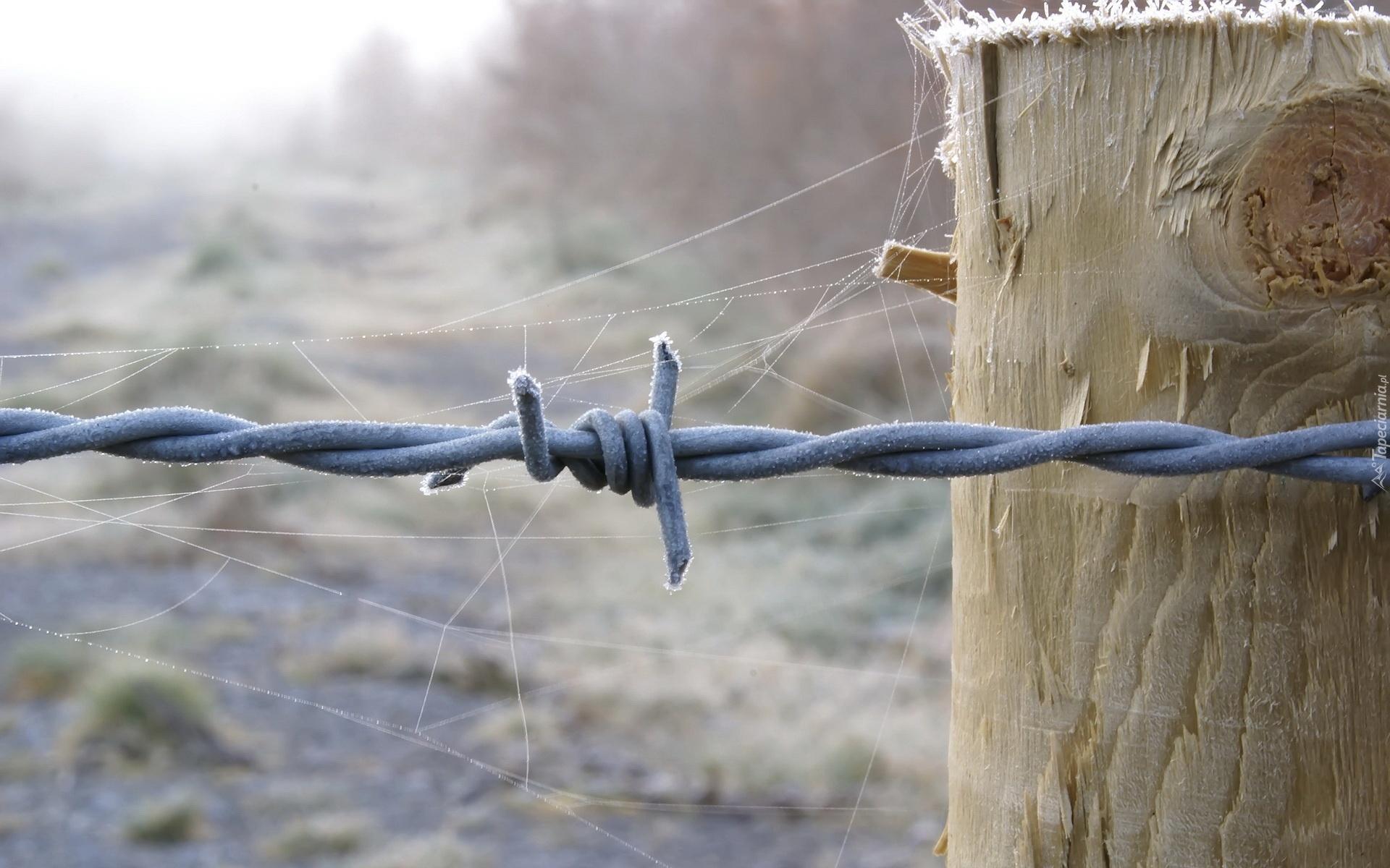 Колючая проволка на заборе  № 1701866  скачать