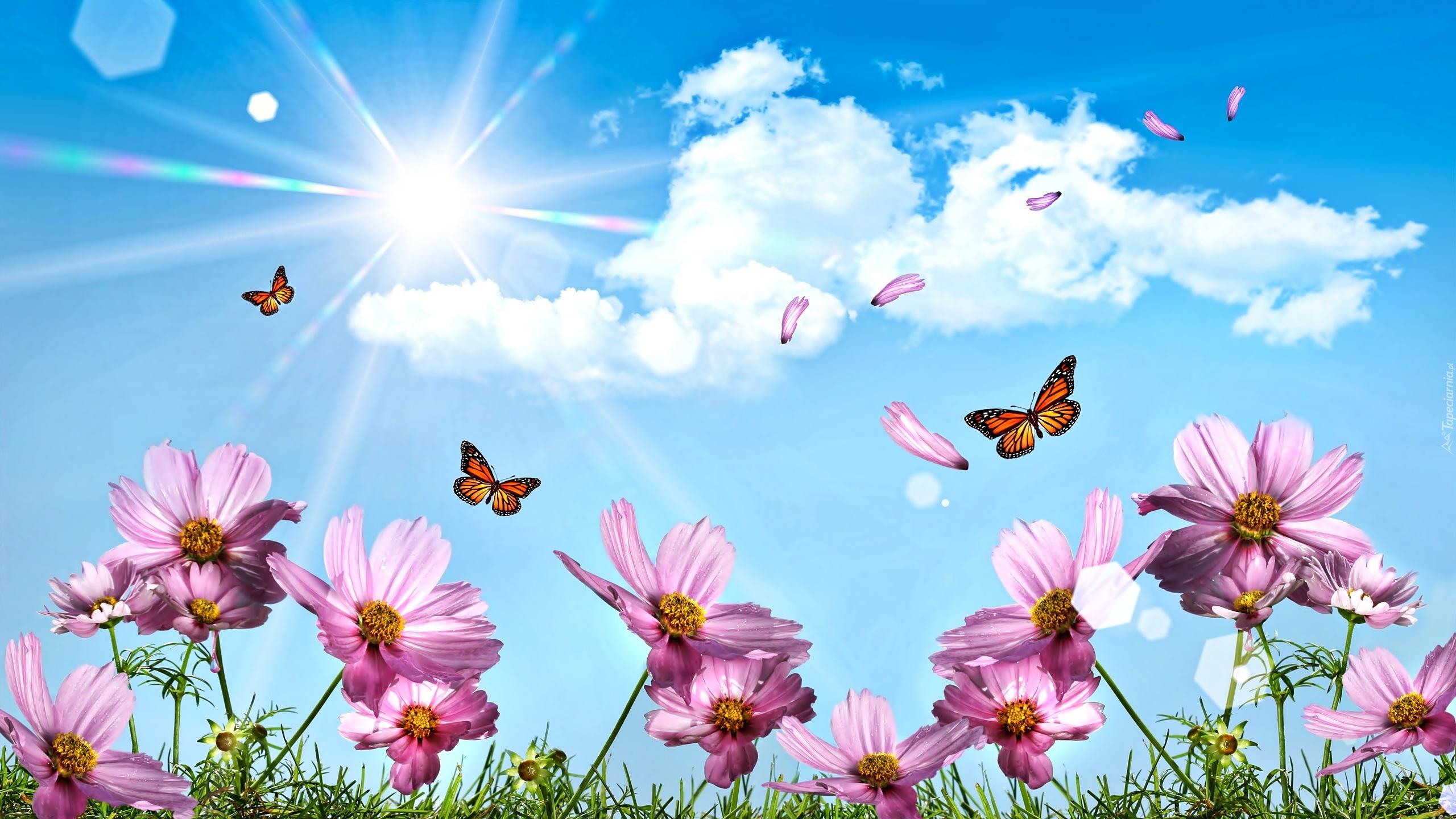 Motyle Kwiaty P Atki