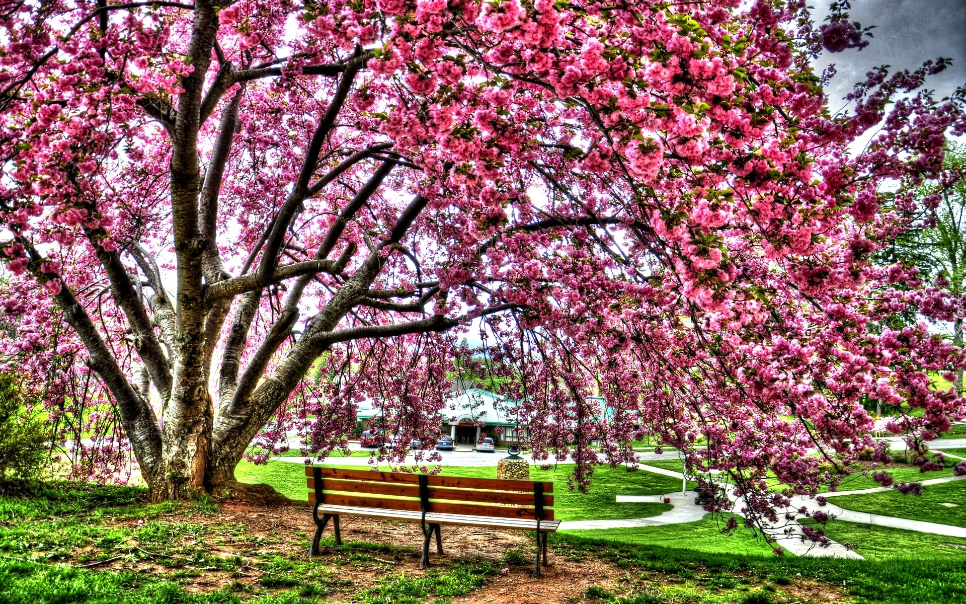 Wiosna, Park, Kwitnące, Drzewo, Ławka
